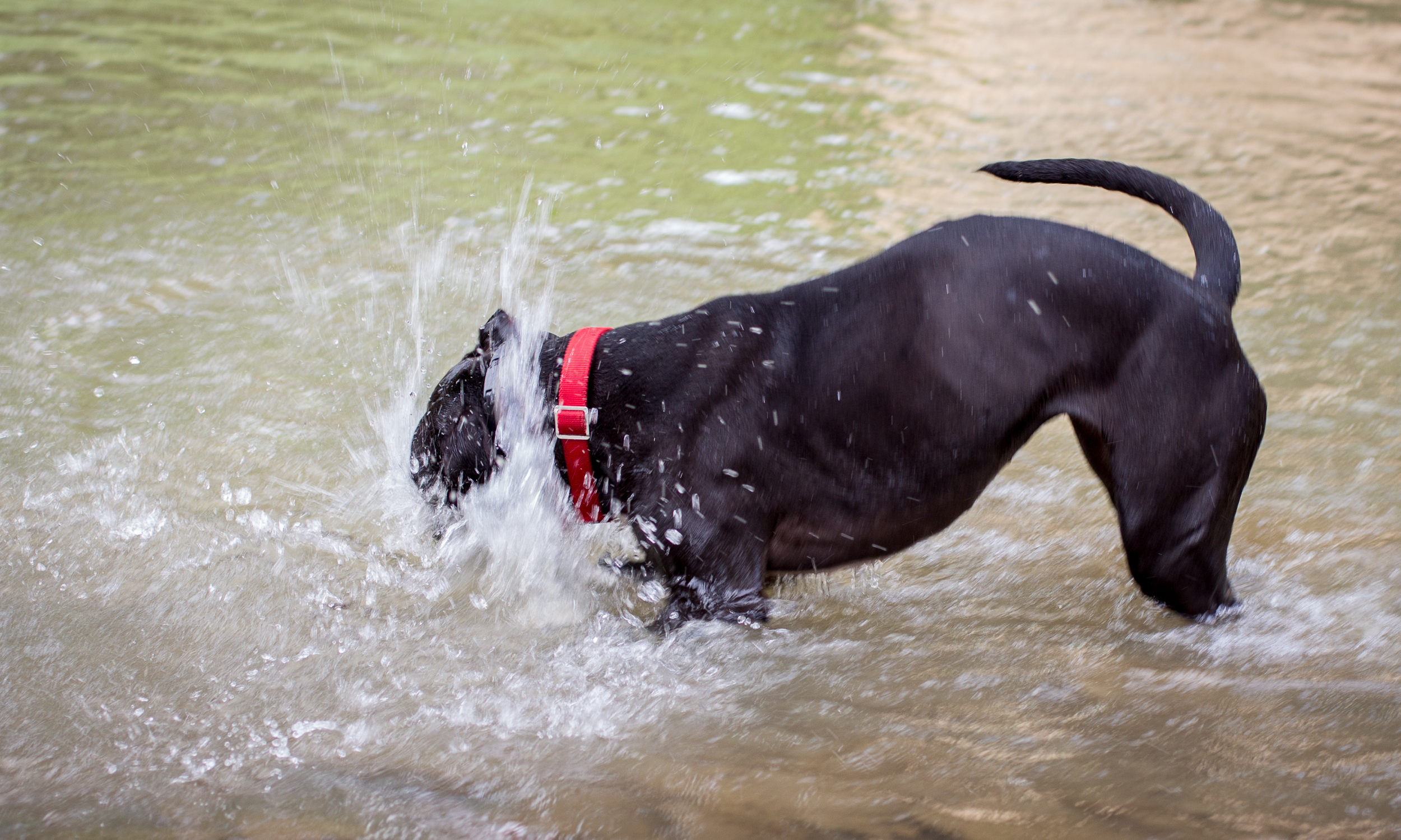 Lacey_river_061617-2.jpg