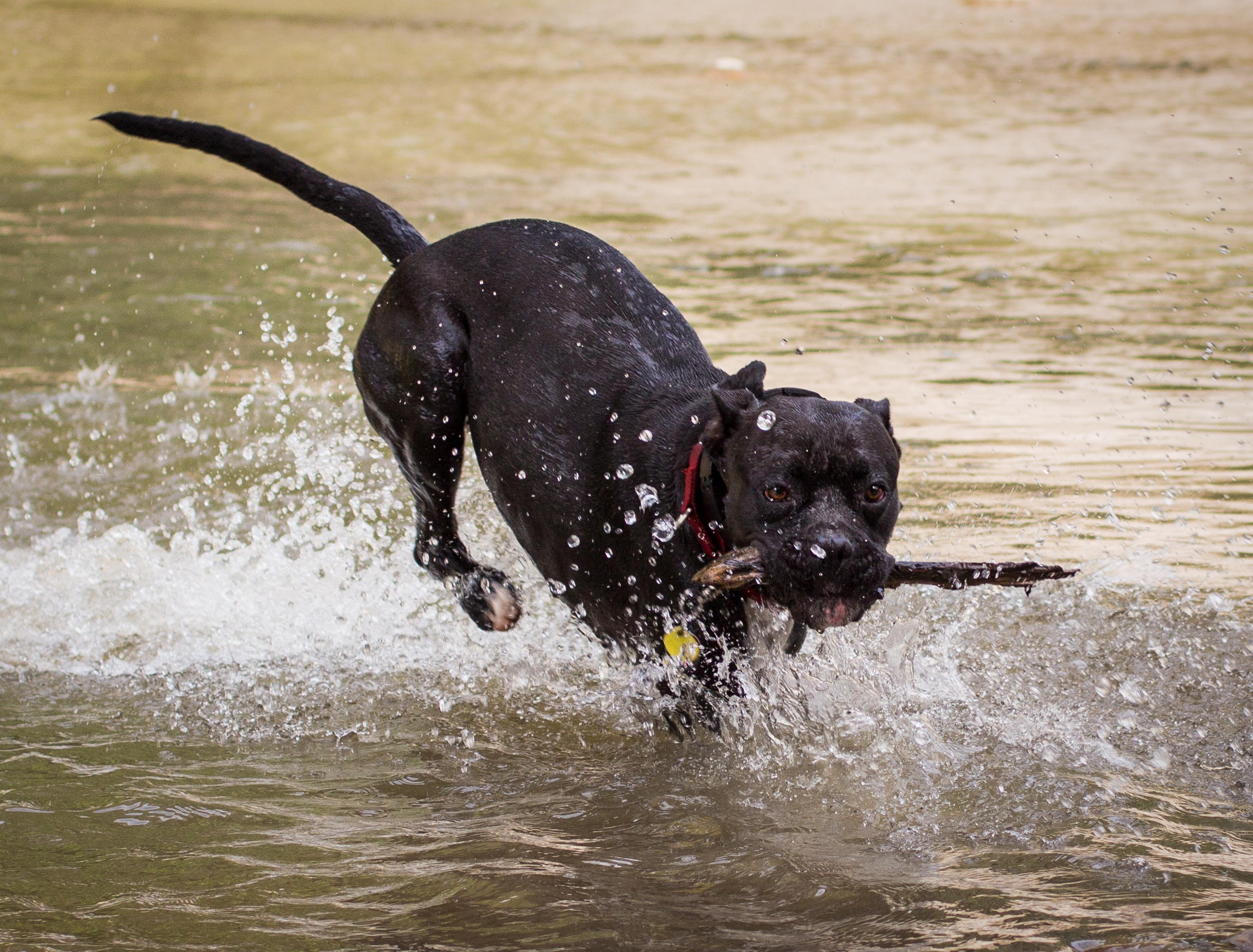 Lacey_river_061617-3.jpg