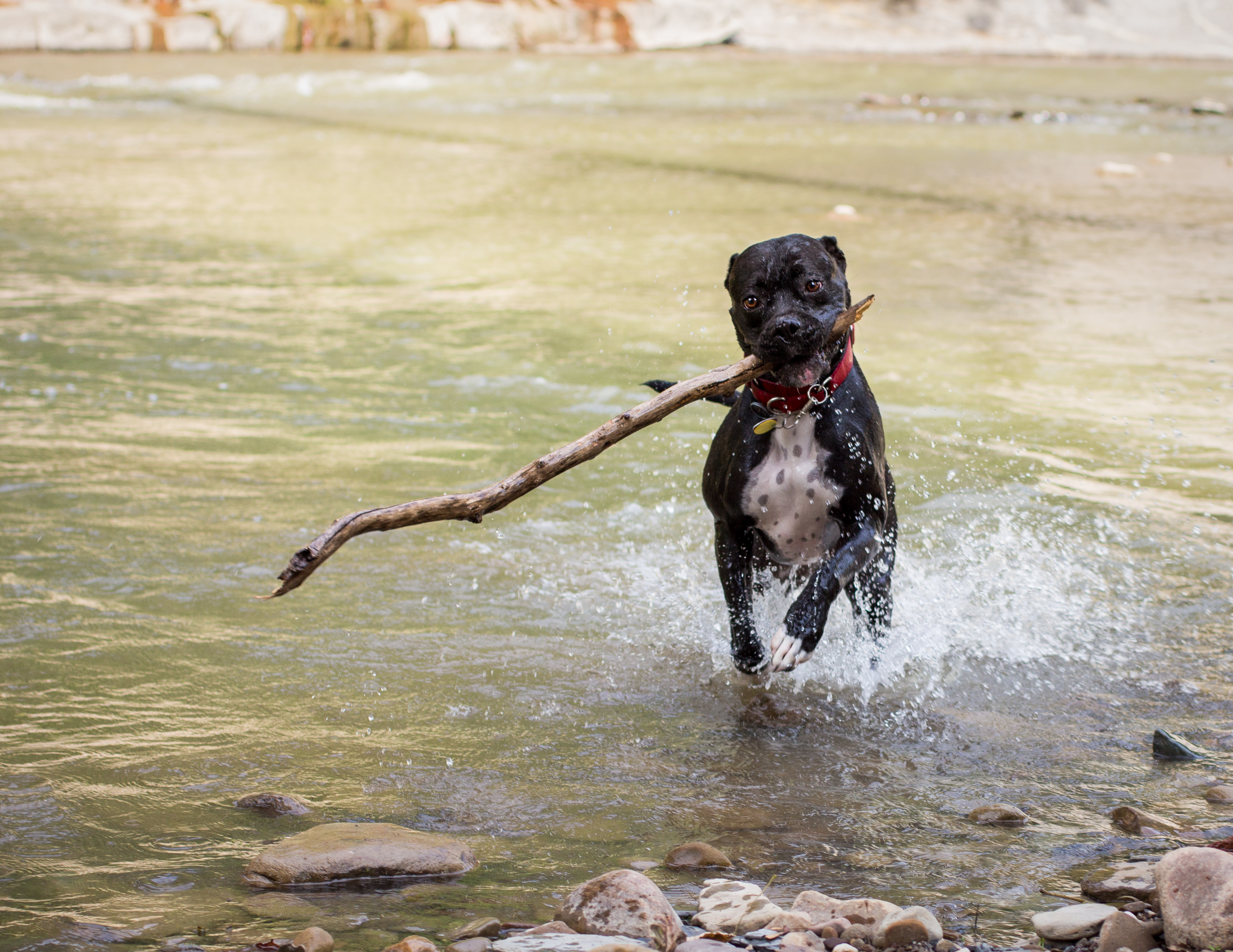 Lacey_river_061617-6.jpg