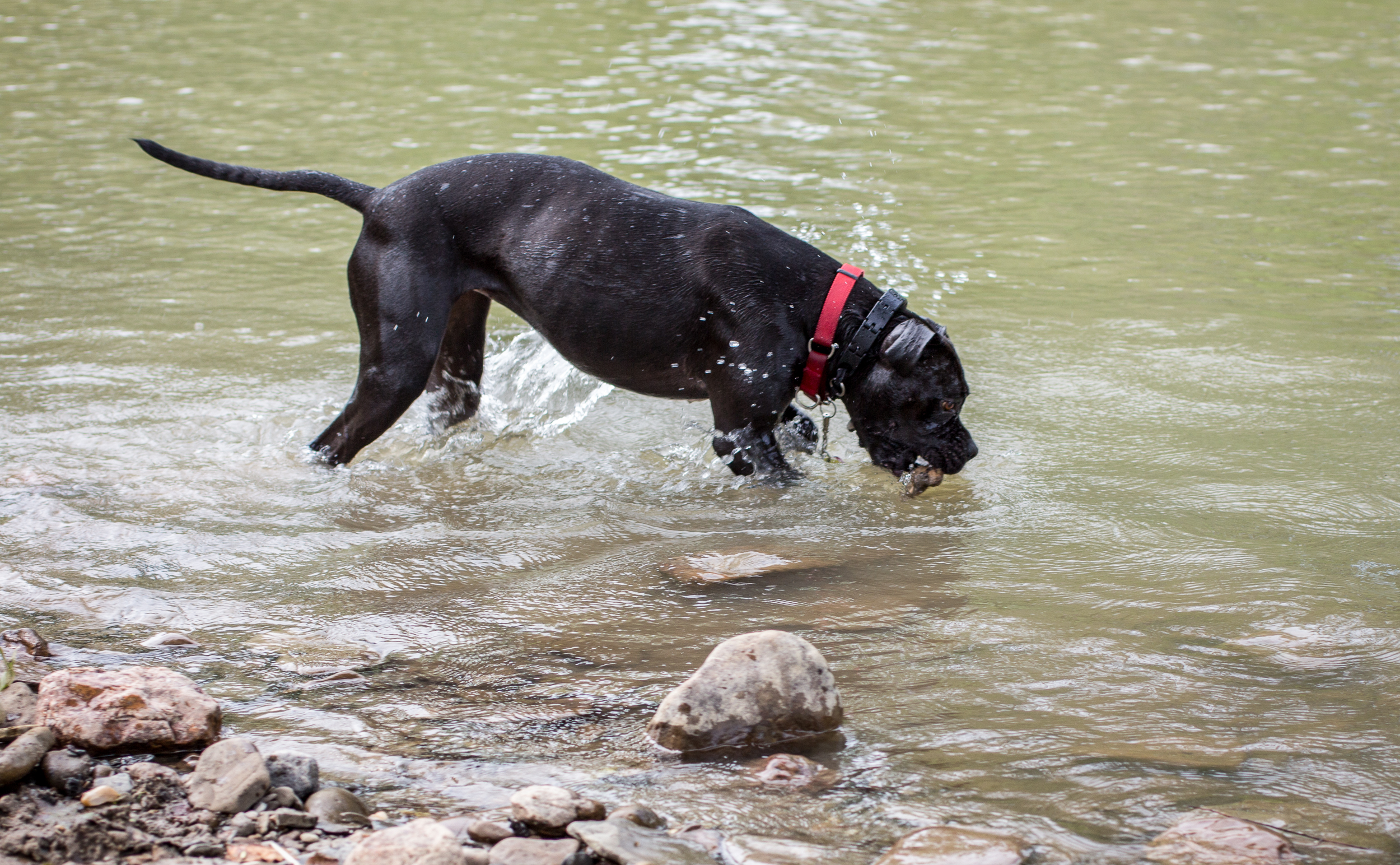 Lacey_river_061617-8.jpg