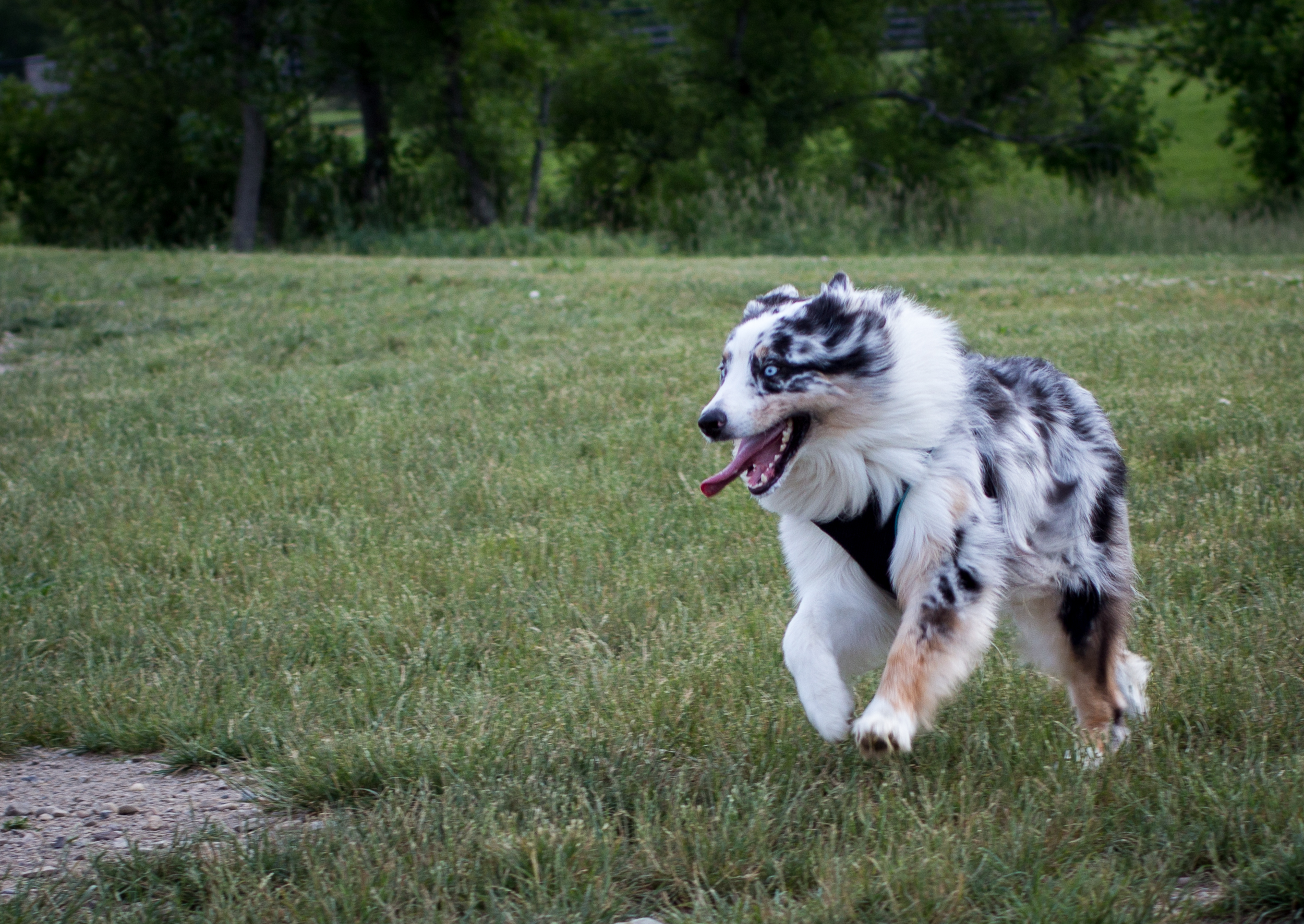 Lacey_dogpark_061817-1.jpg