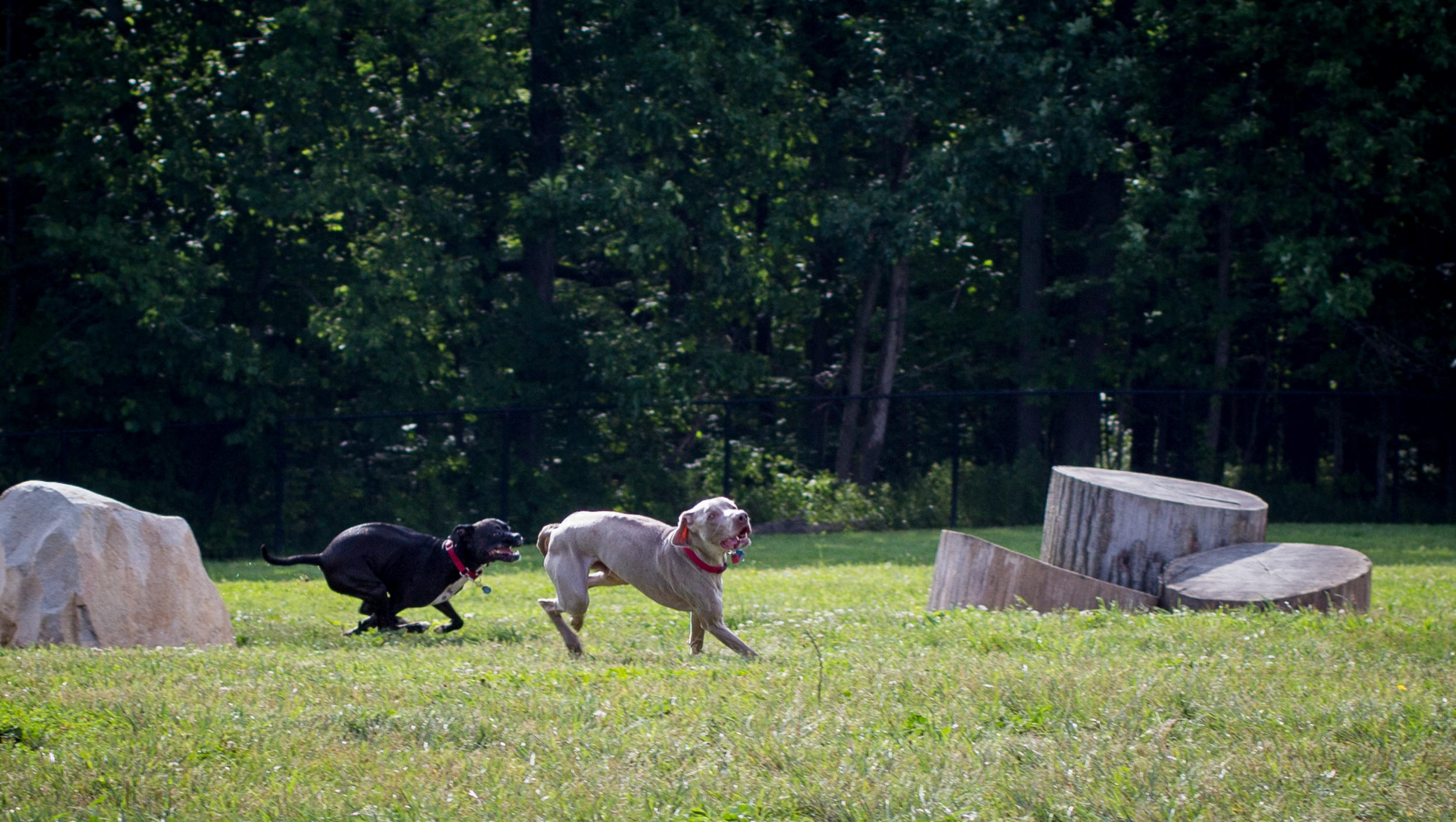 Lacey_dogpark_061817-3.jpg