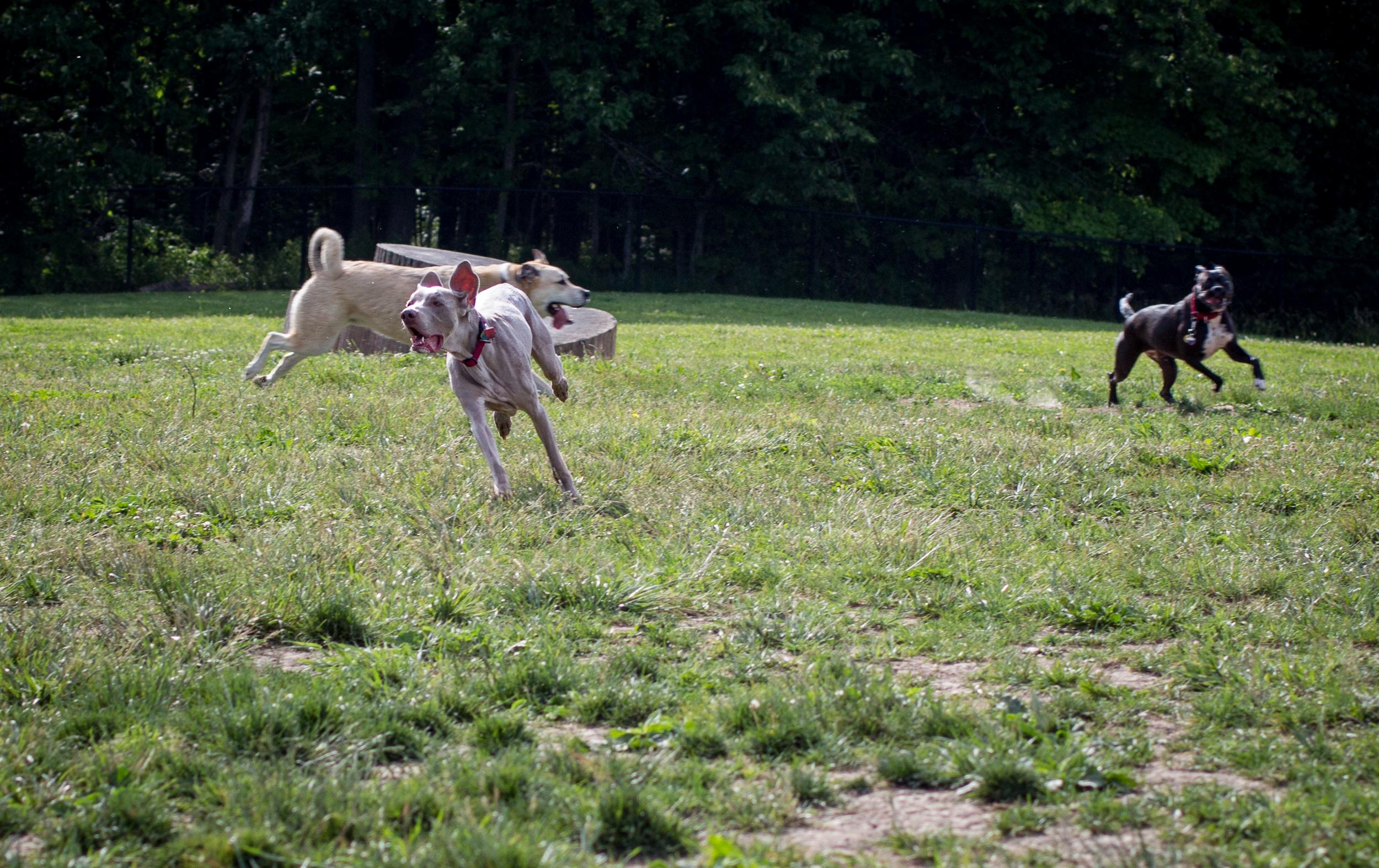 Lacey_dogpark_061817-5.jpg