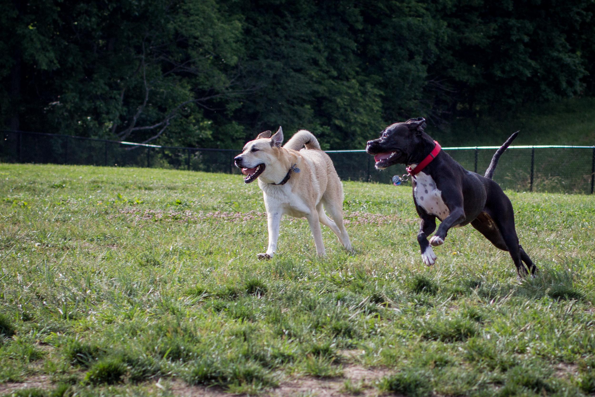 Lacey_dogpark_061817-6.jpg