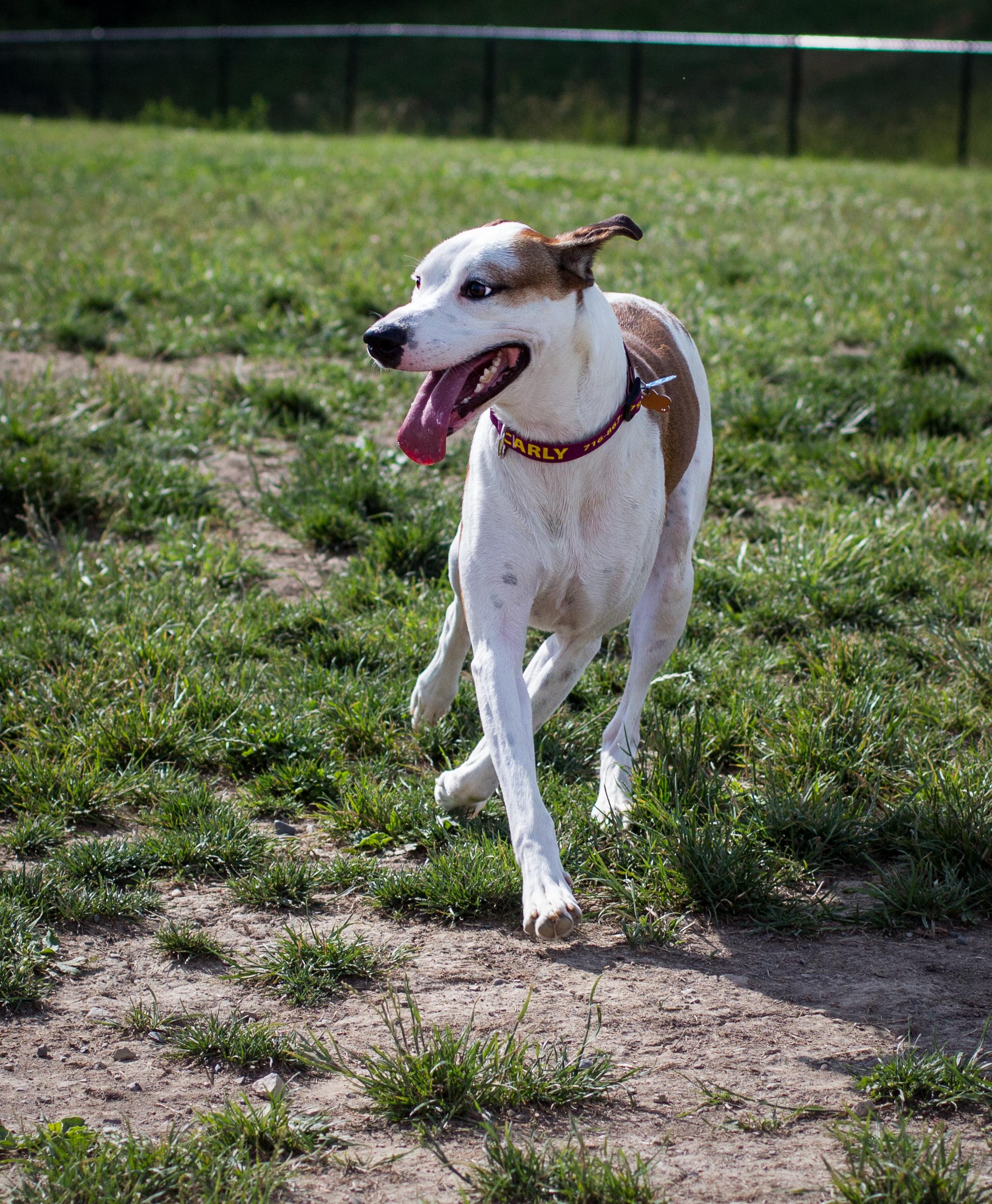 Lacey_dogpark_061817-18.jpg