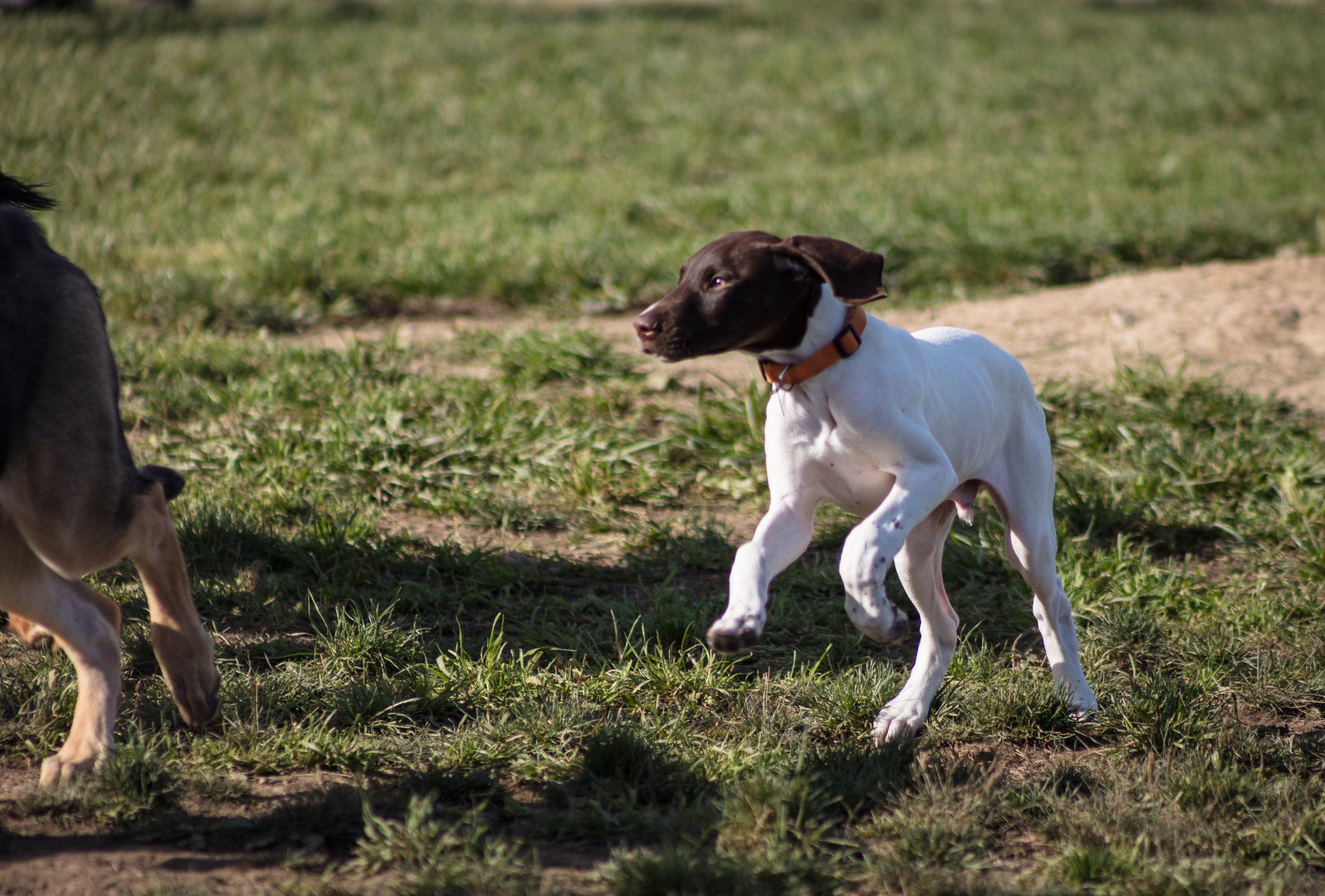 Dogs-6.jpg