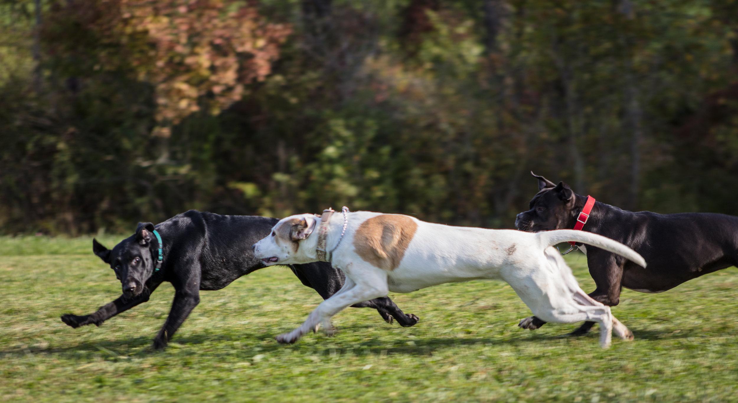 Dogs-9.jpg
