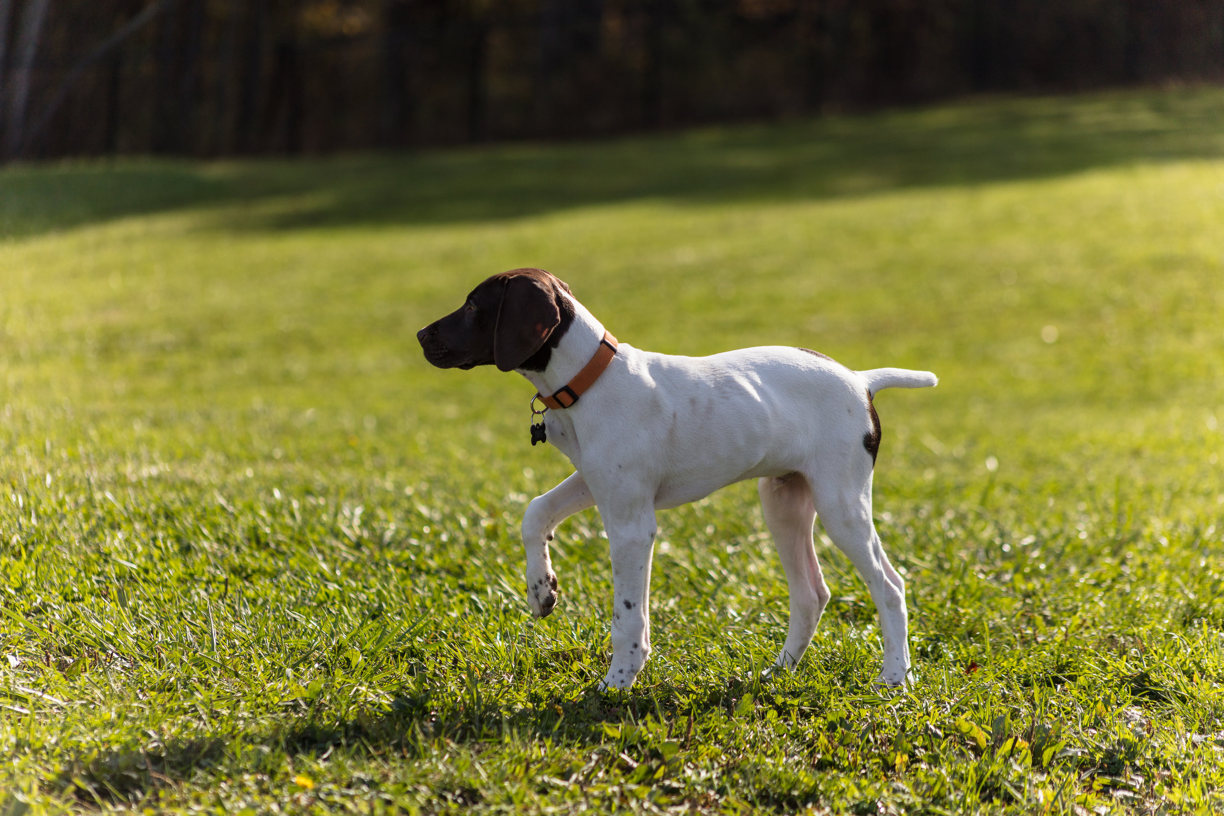 Dogs-13.jpg