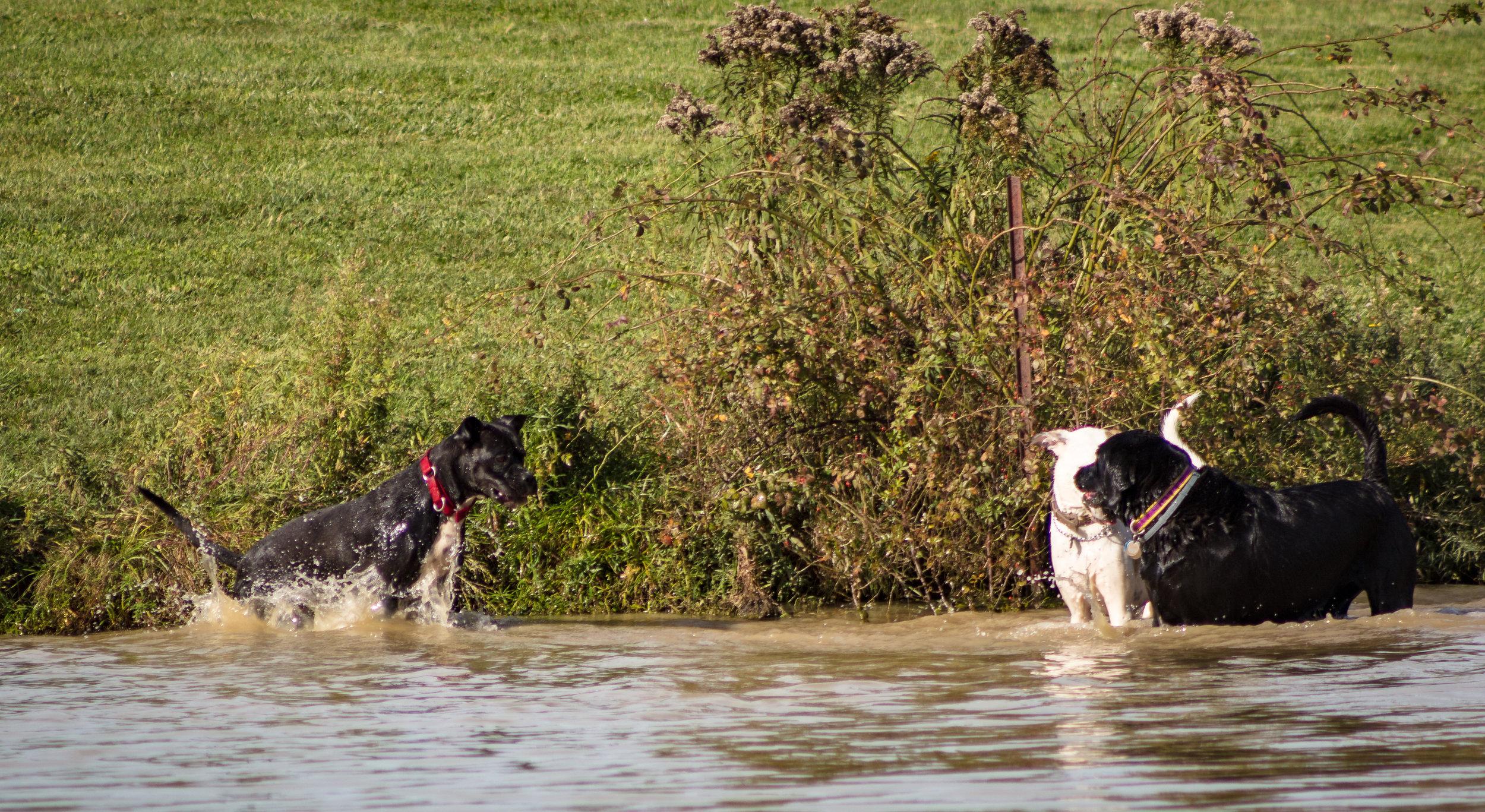 Dogs-15.jpg