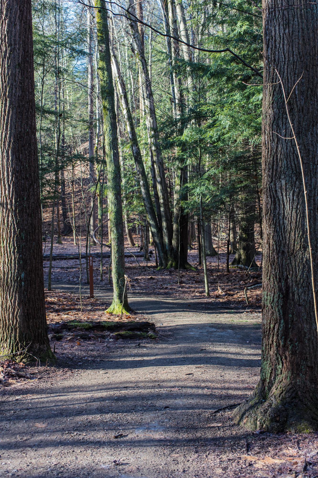 Skok Meadow-6150.jpg