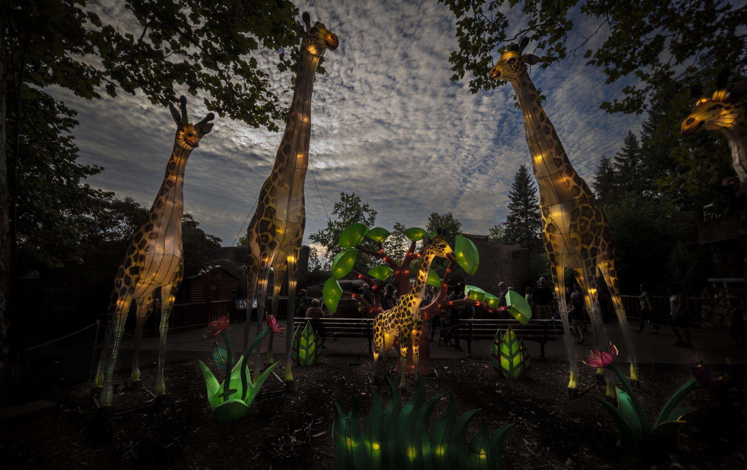 Asian Lanterns7.jpg