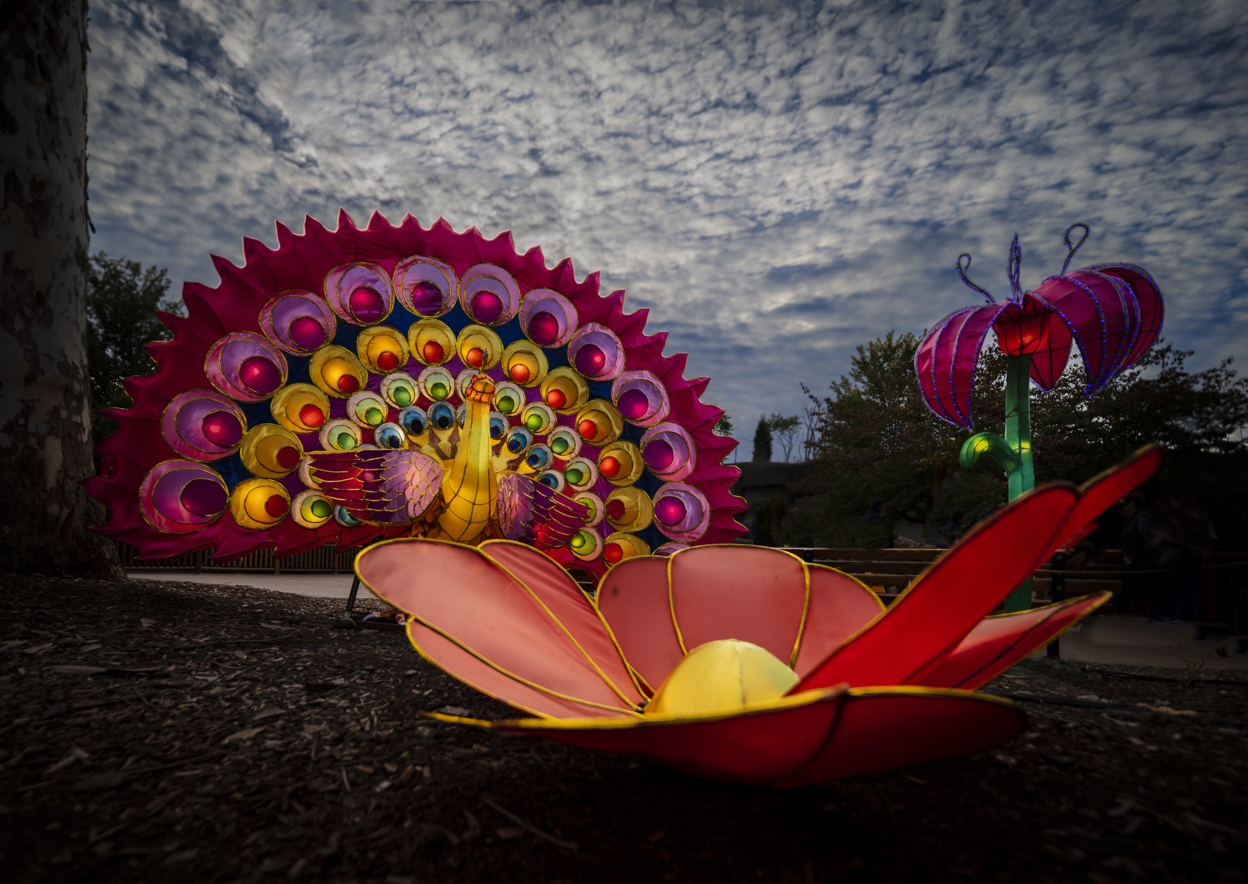 Asian Lanterns8.jpg