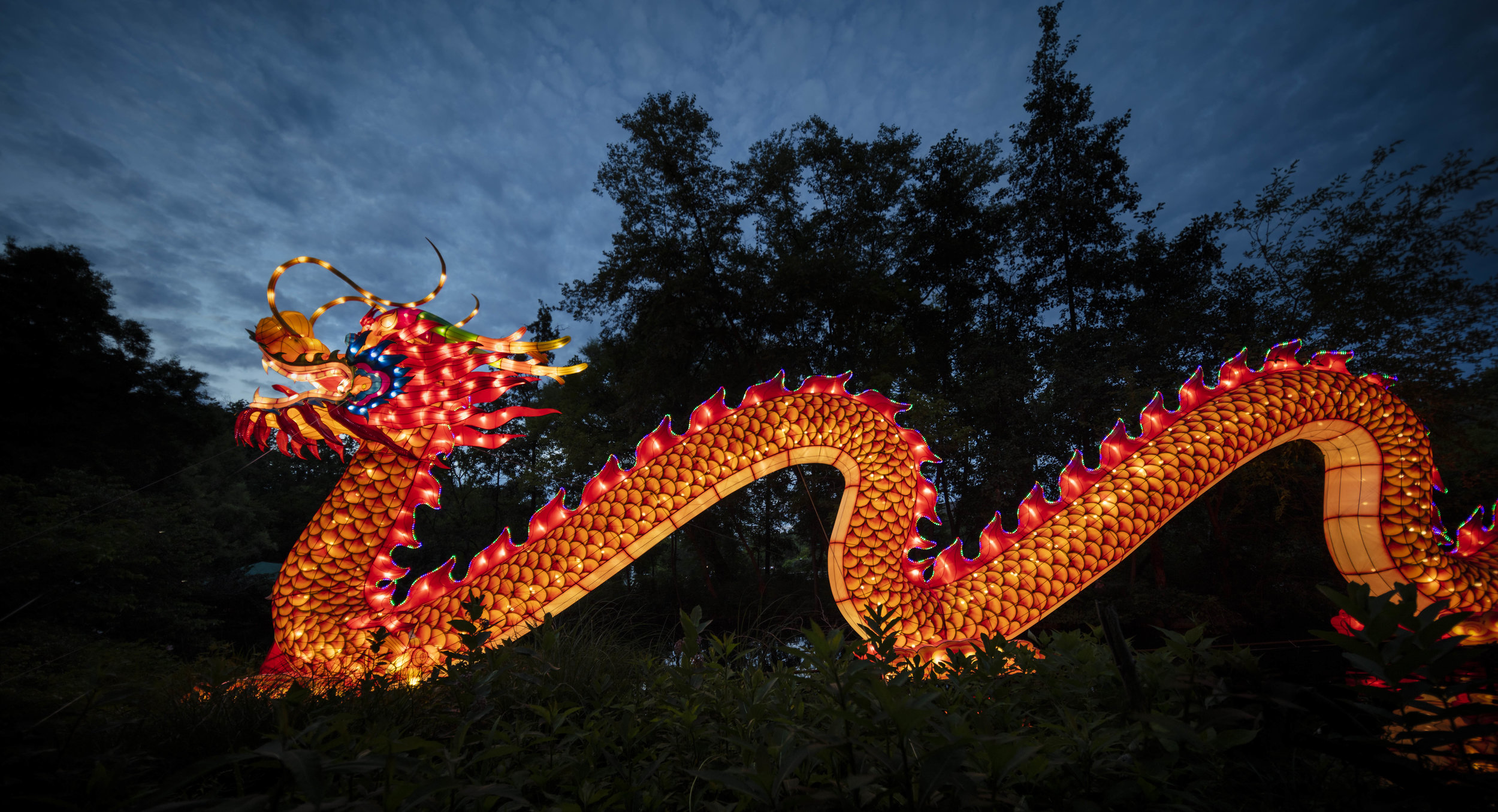 Asian Lanterns24.jpg