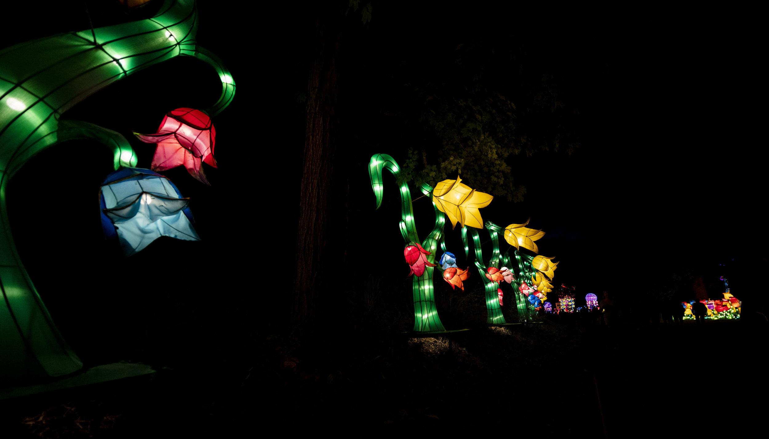 Asian Lanterns34.jpg
