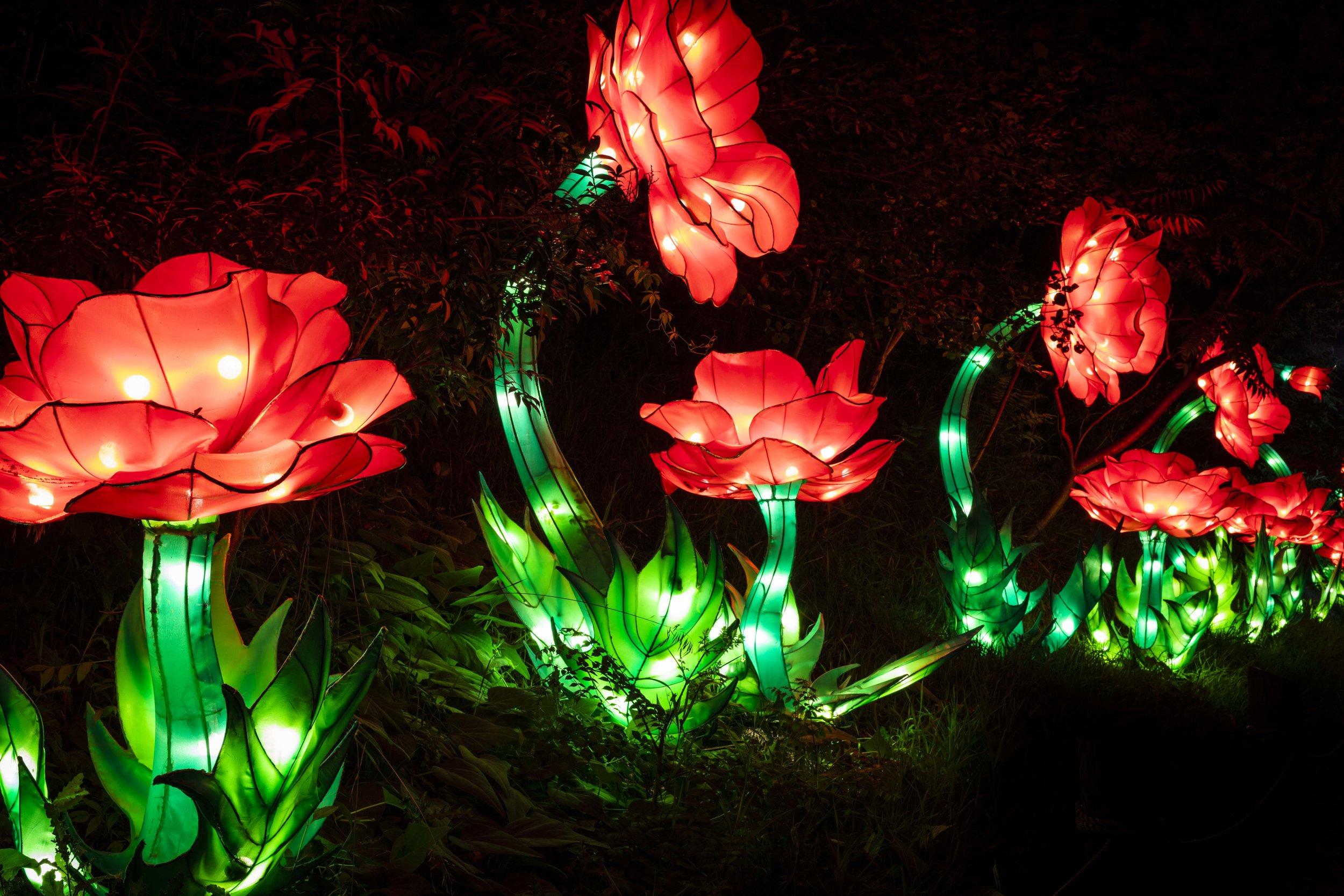 Asian Lanterns46.jpg