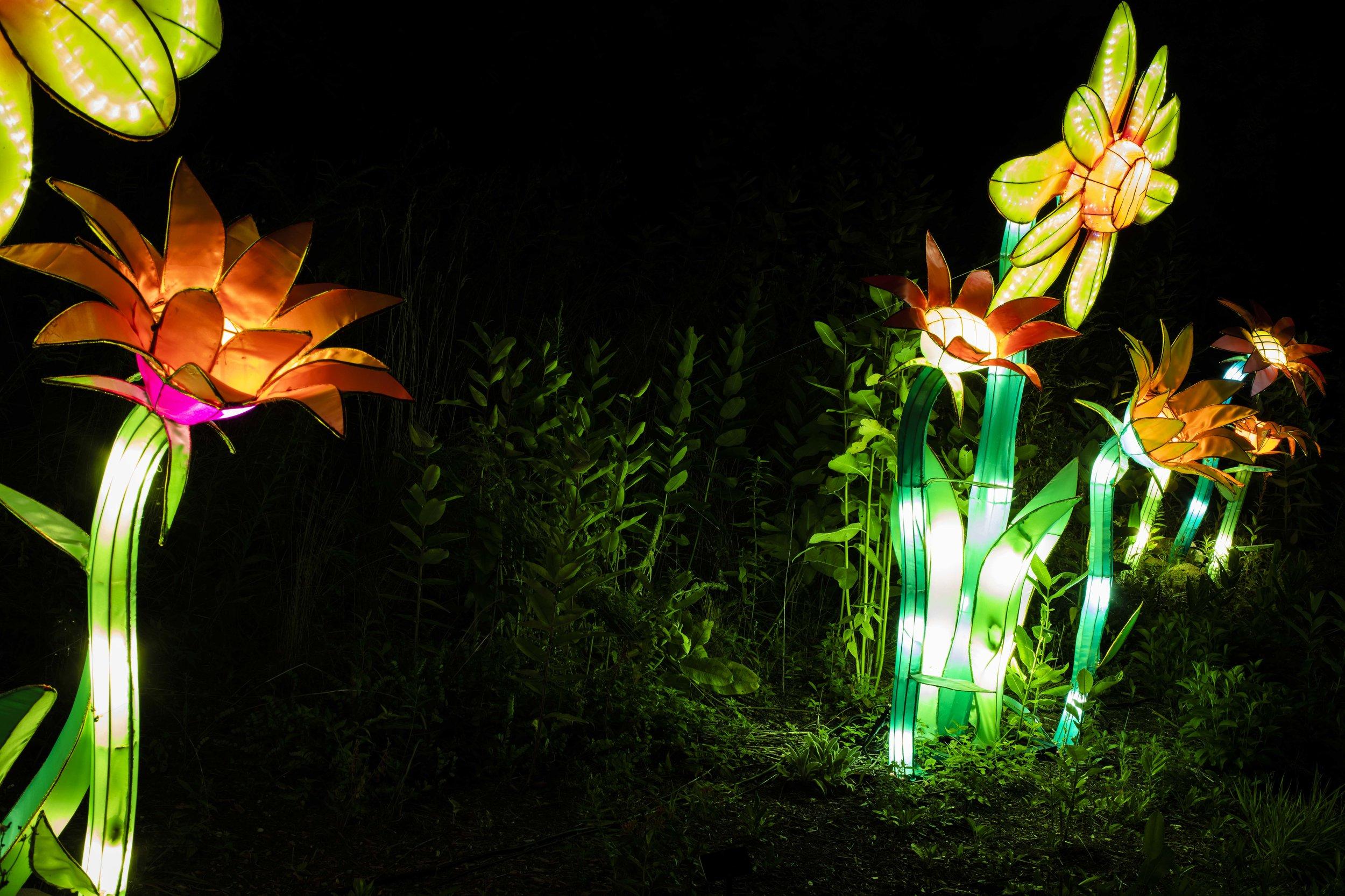 Asian Lanterns47.jpg