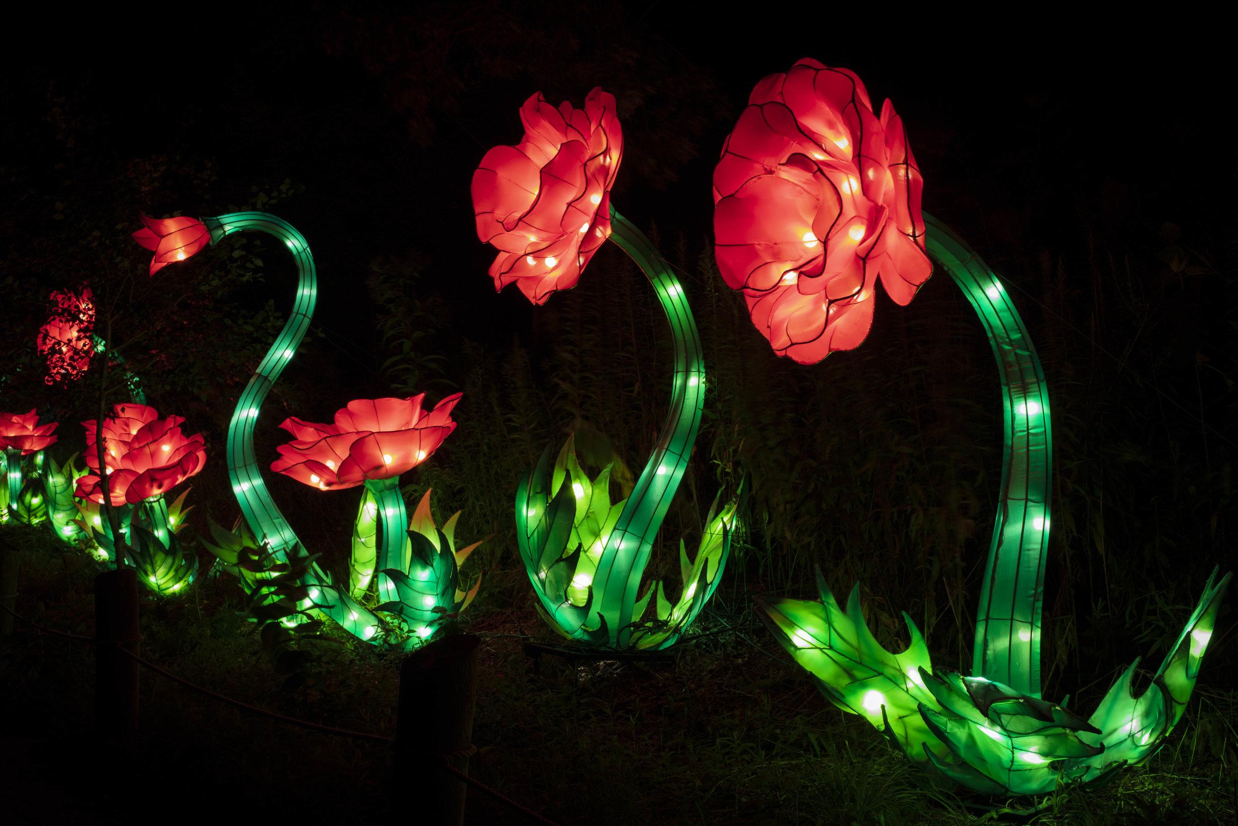 Asian Lanterns52.jpg