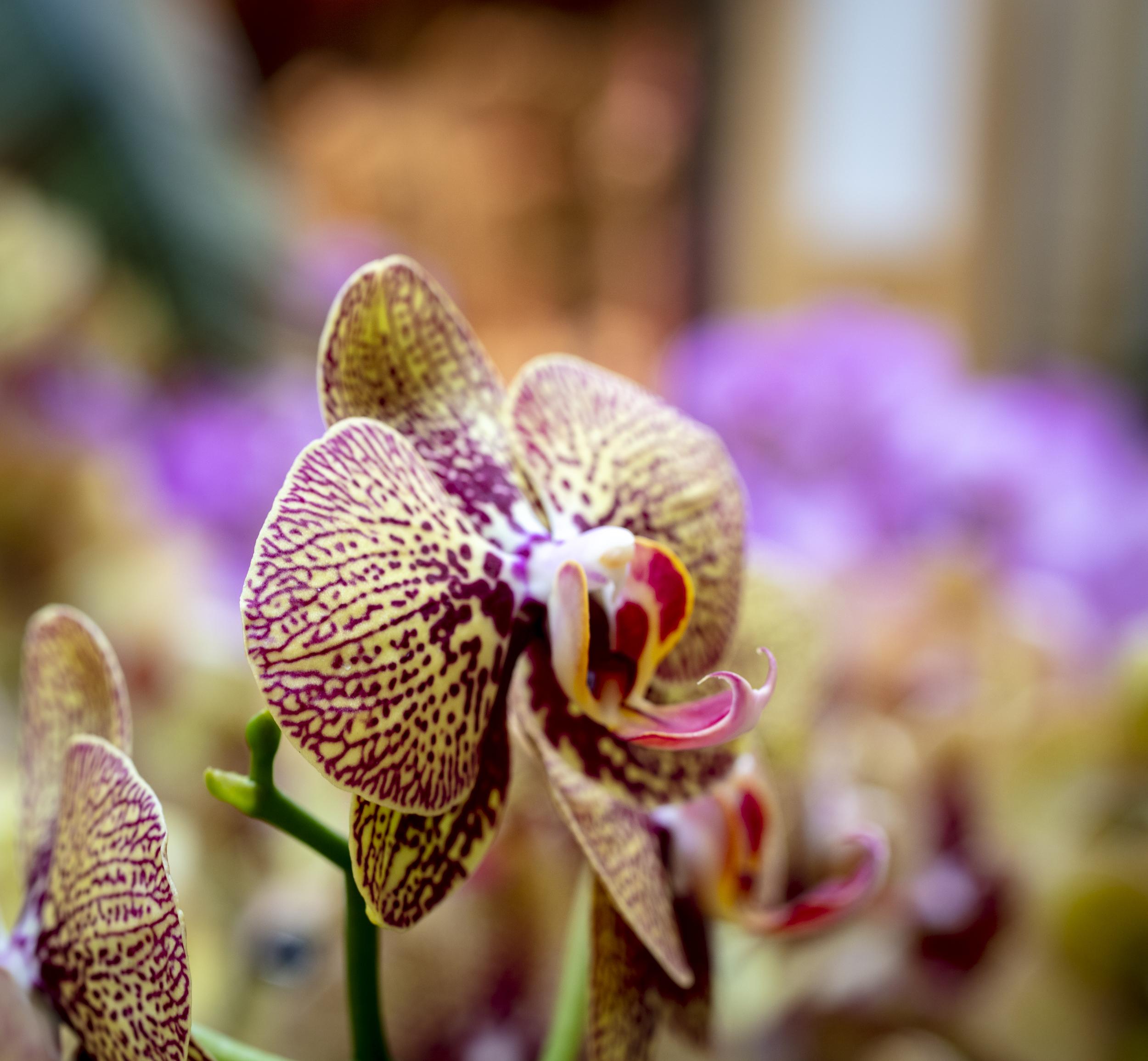 Orchids-2.jpg