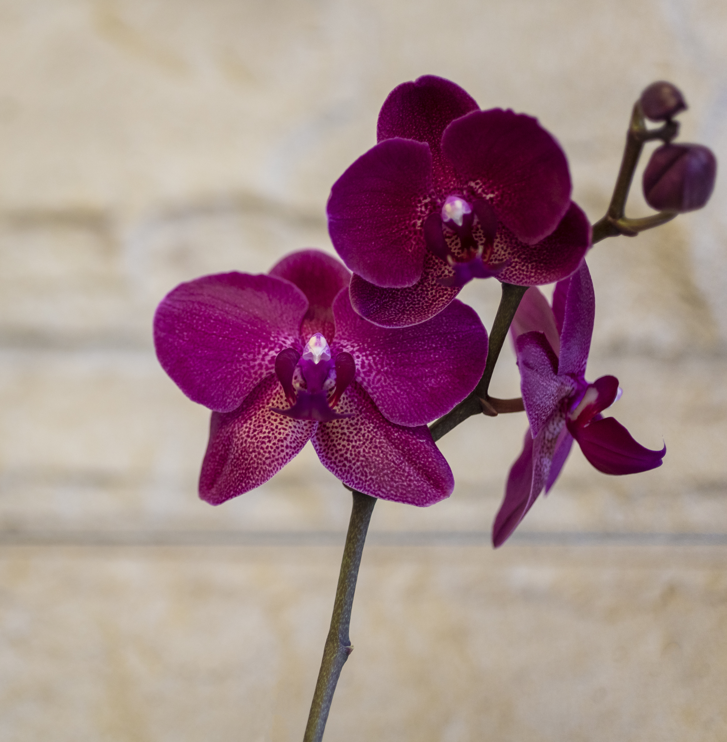 Orchids-16.jpg