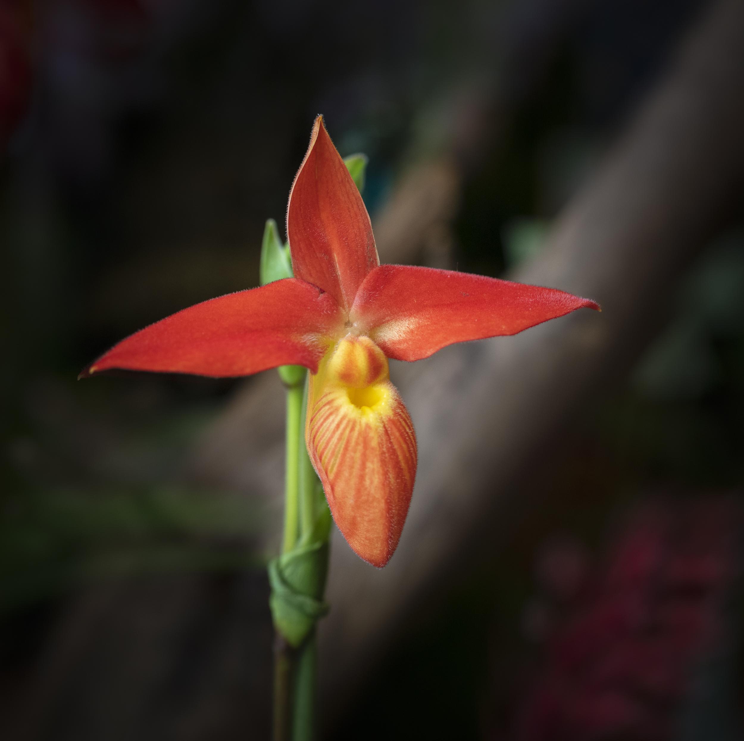 Orchids-18.jpg