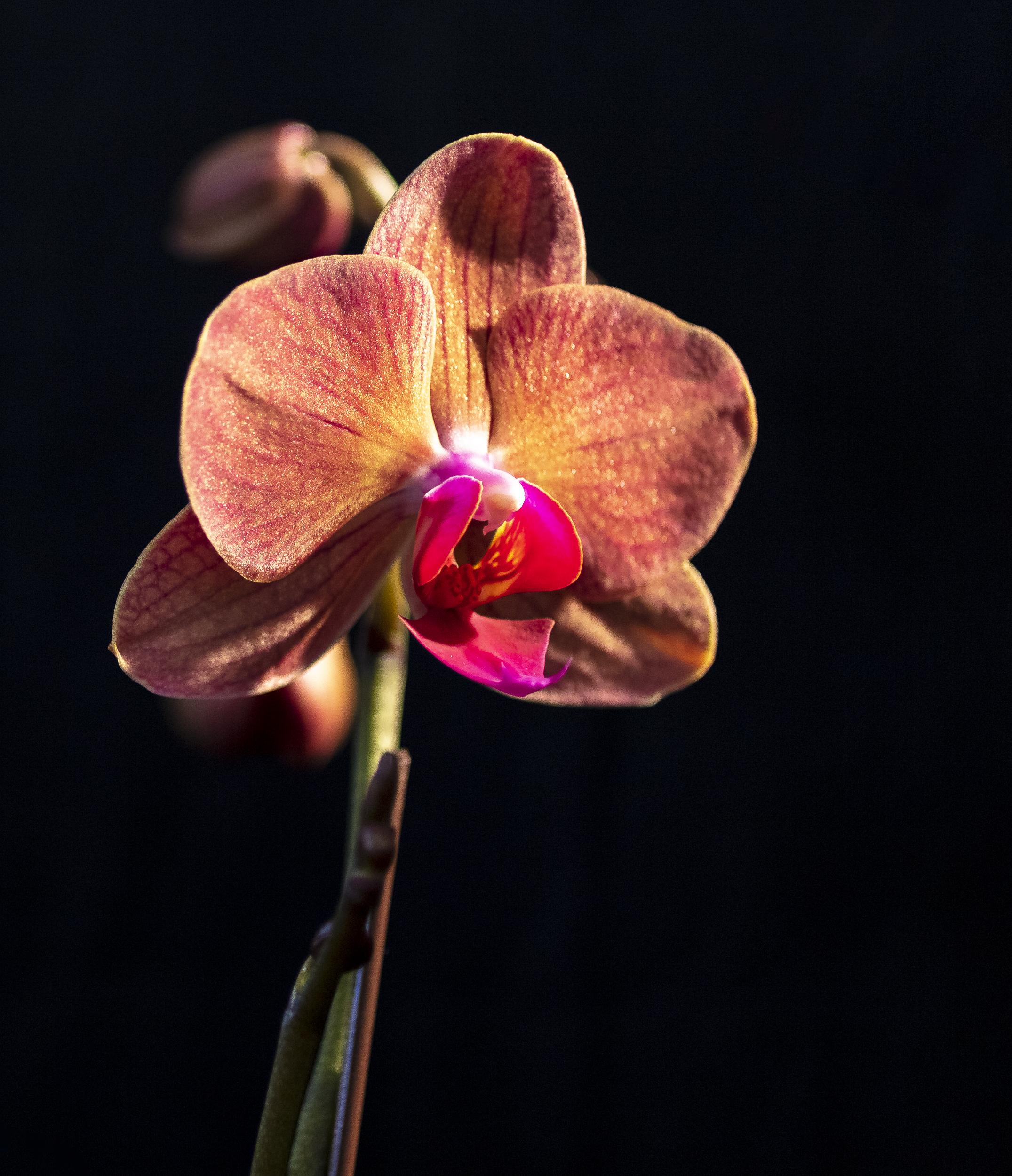 Orchids-27.jpg