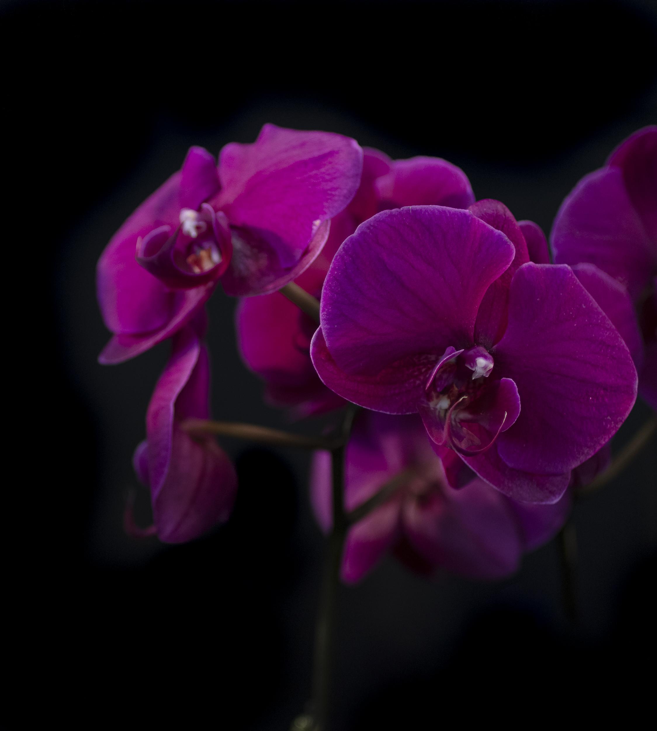 Orchids-29.jpg