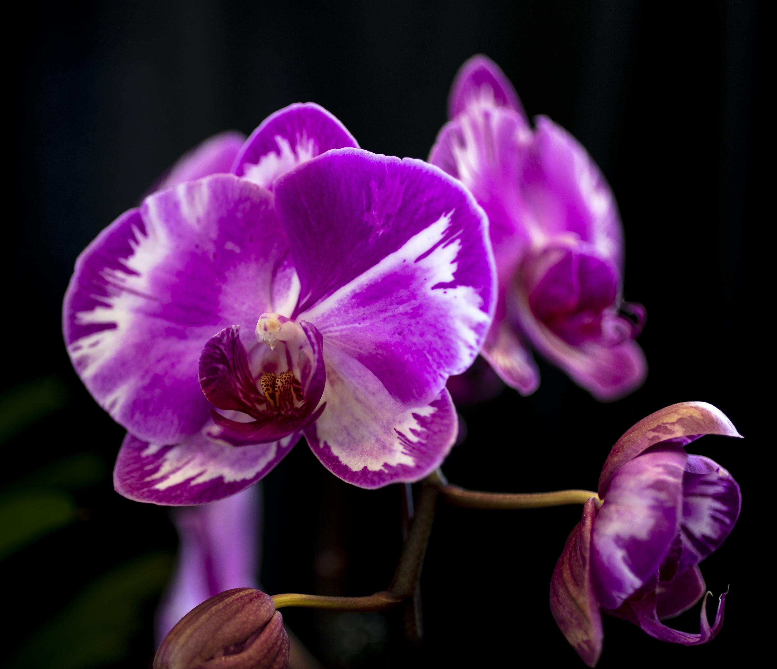 Orchids-34.jpg