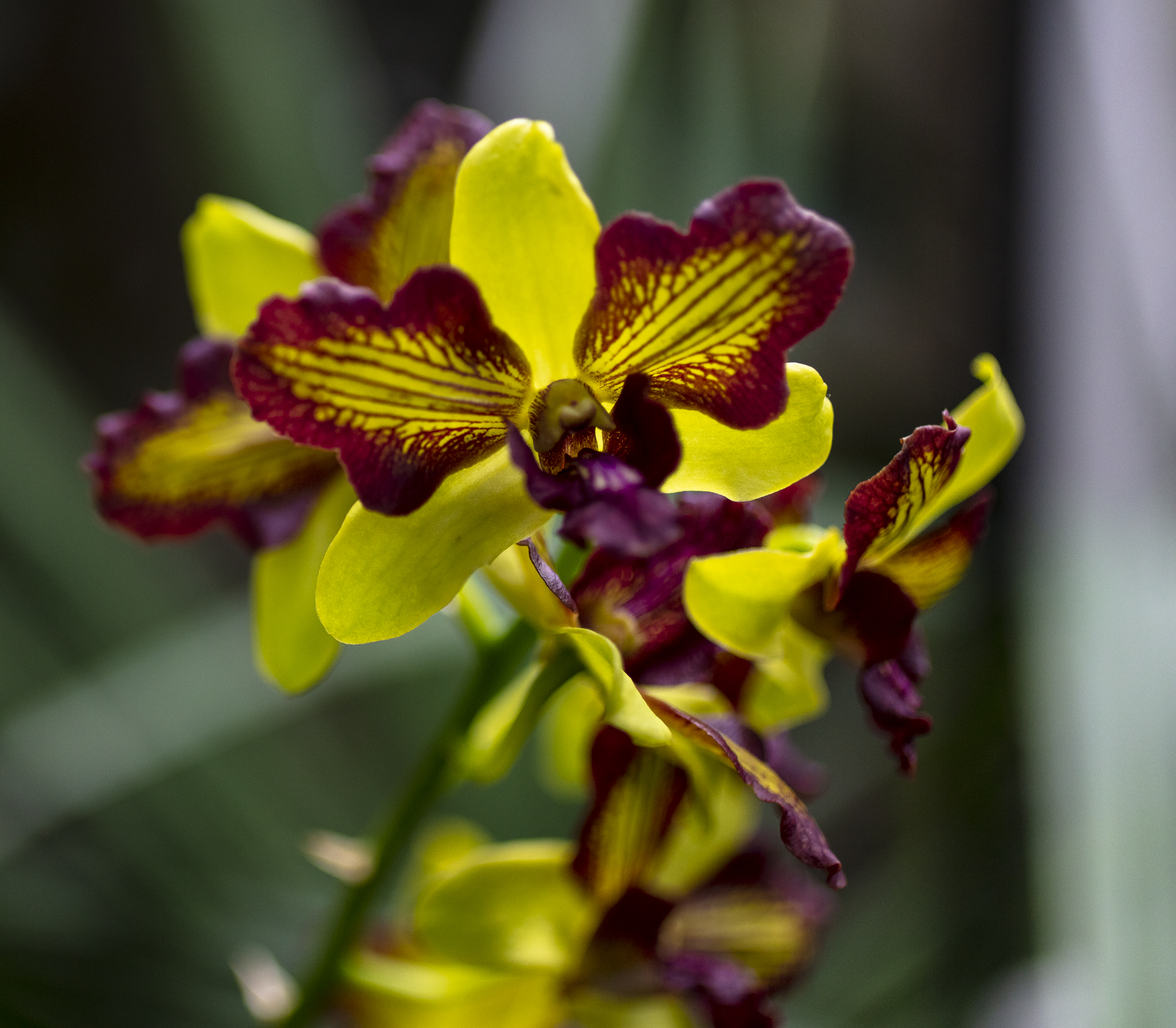 Orchids-40.jpg