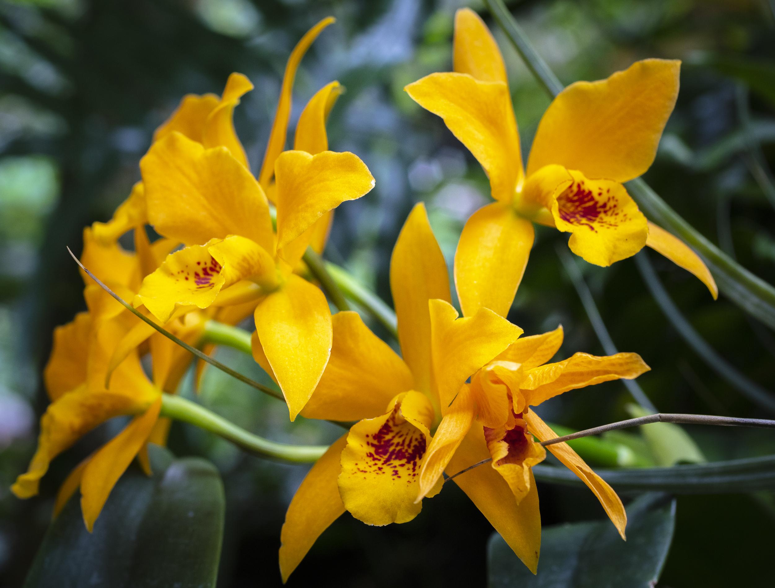 Orchids-45.jpg