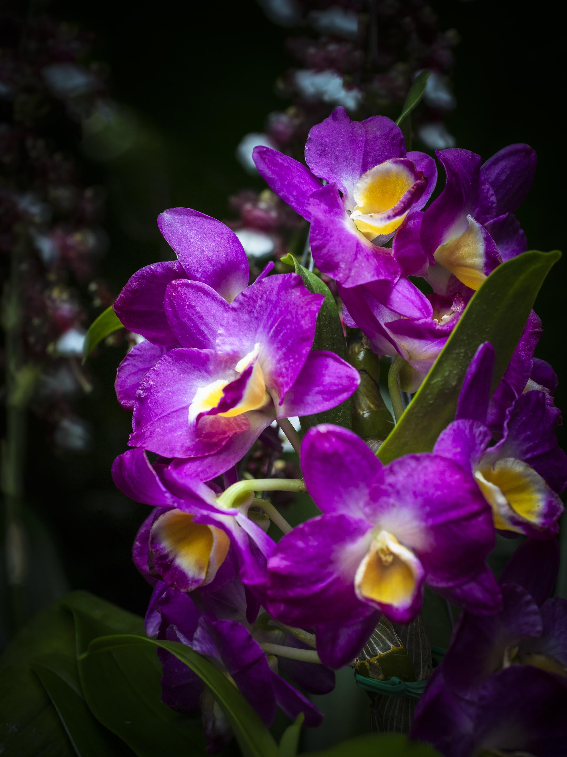 Orchids-46.jpg