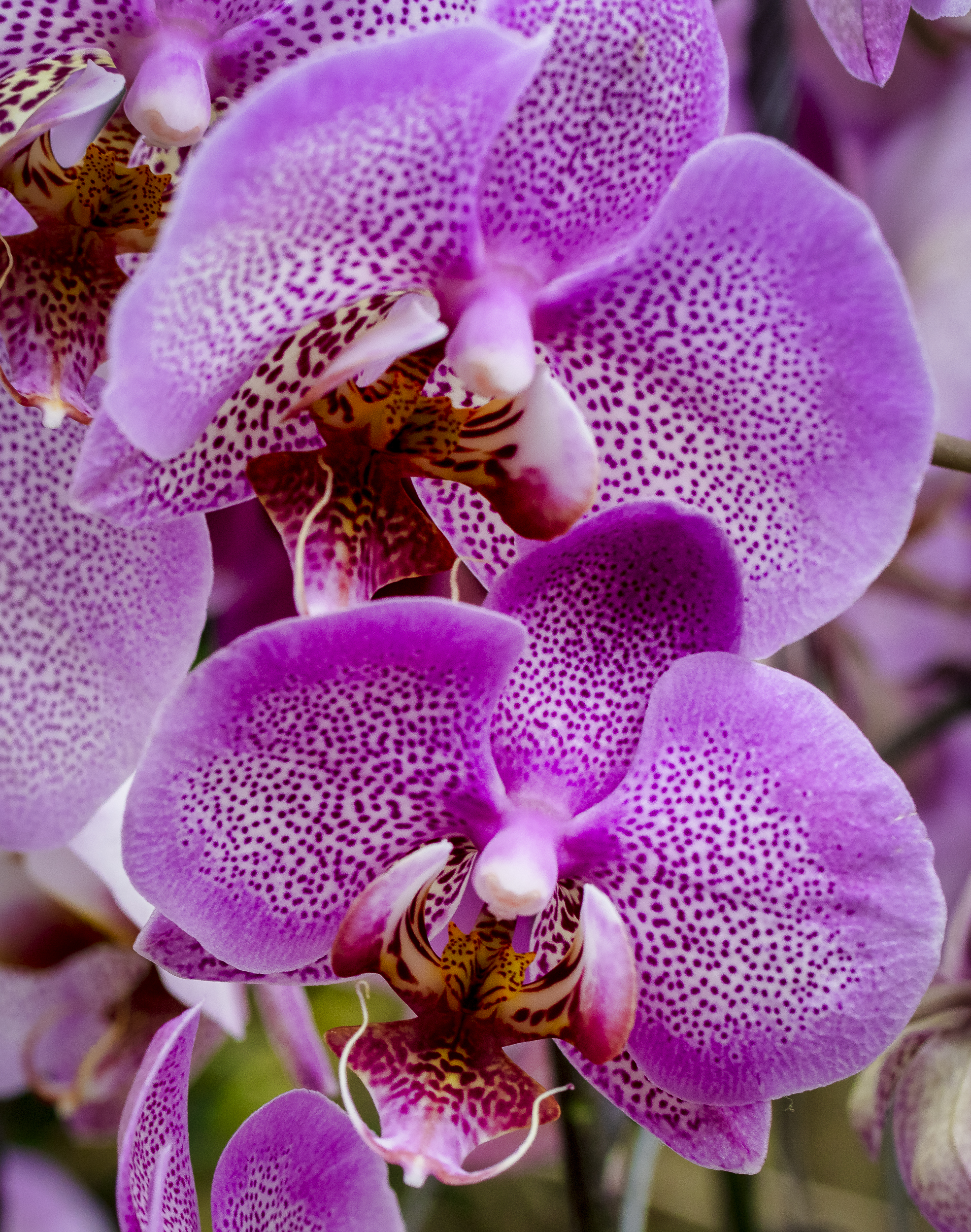 Orchids-49.jpg