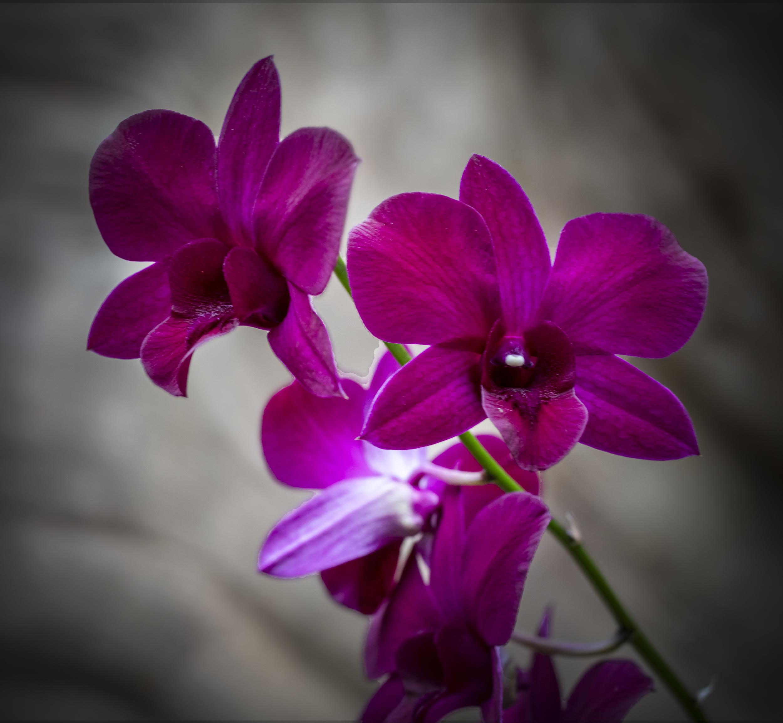 Orchids-50.jpg