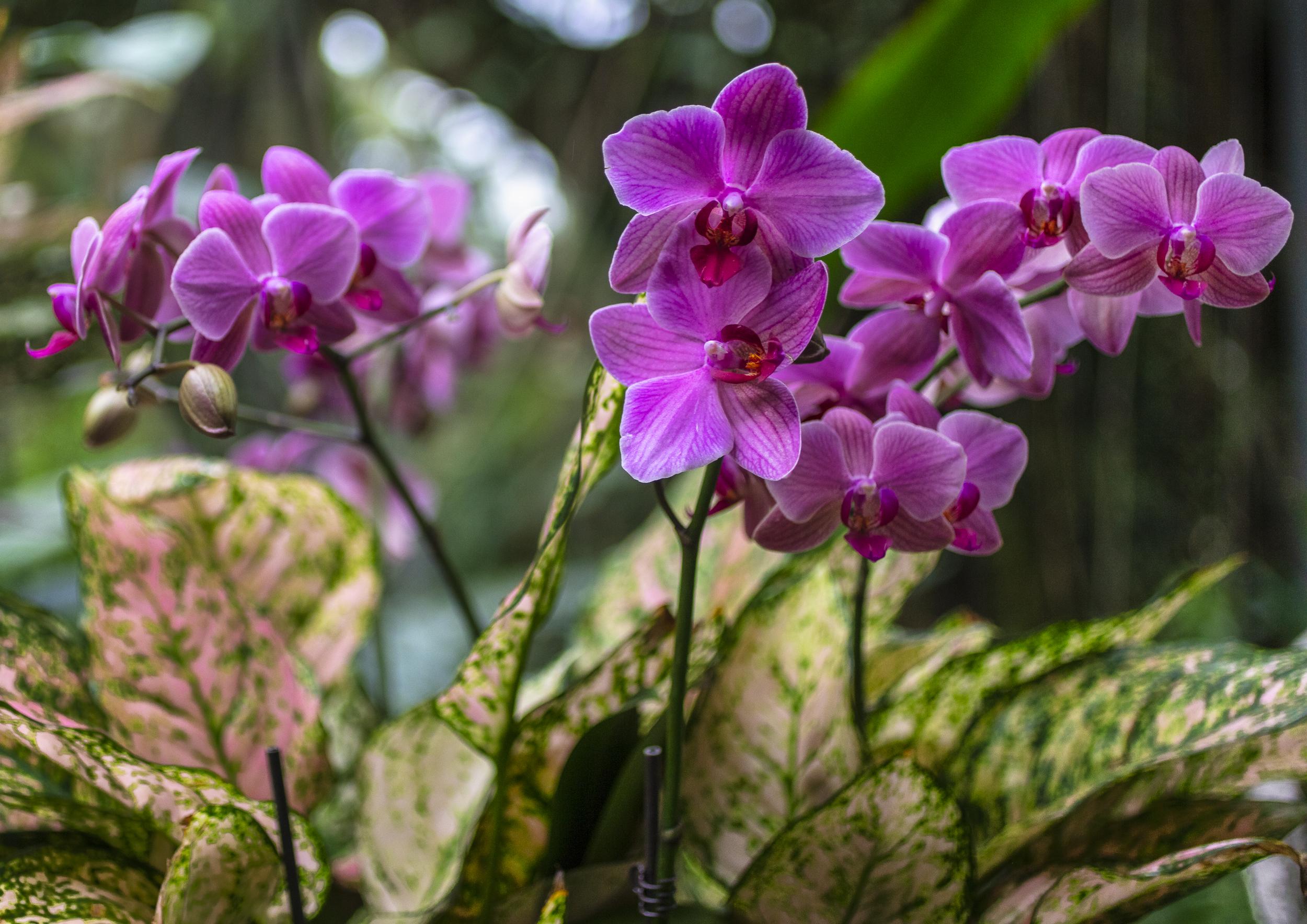 Orchids-60.jpg