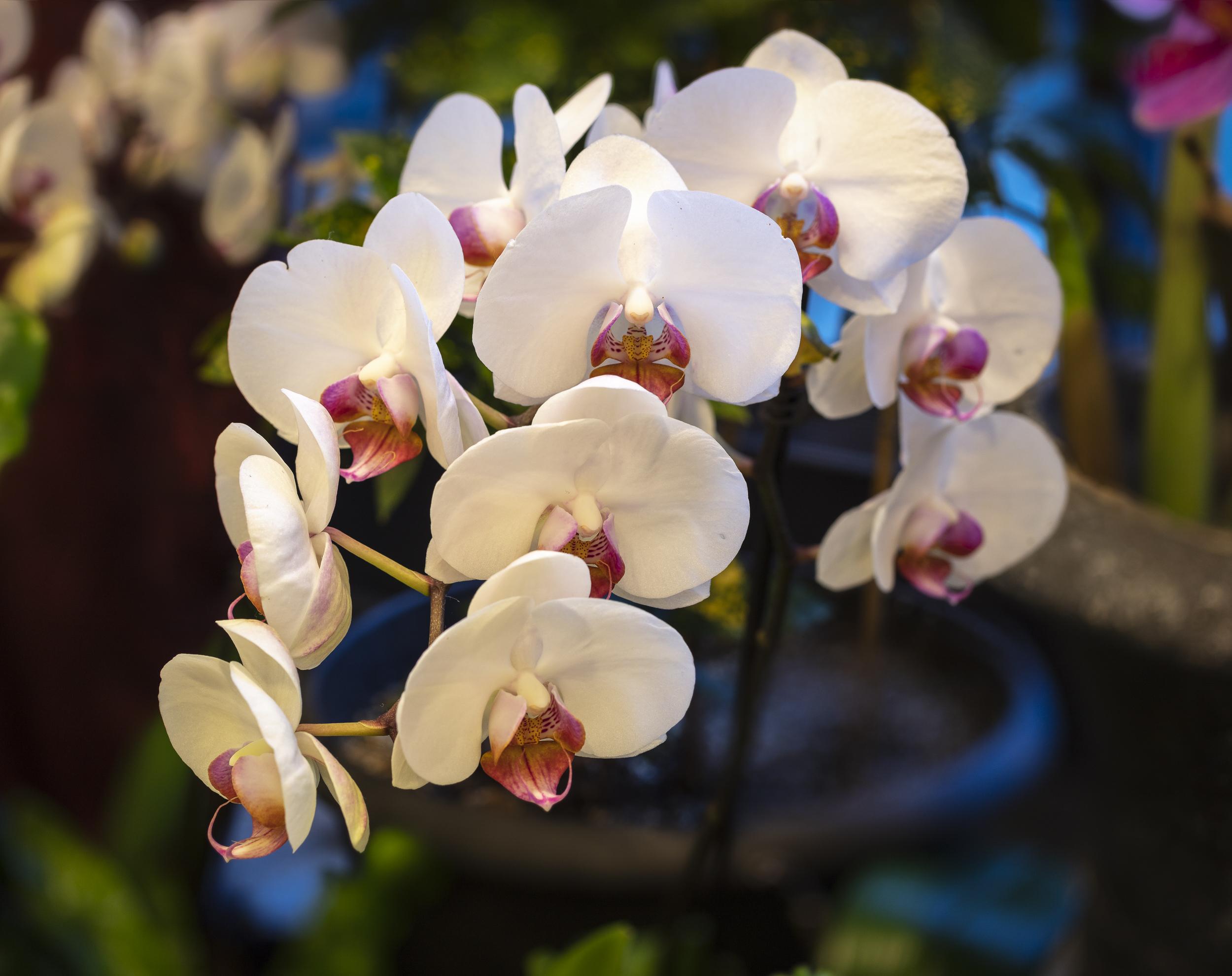 Orchids2-3.jpg