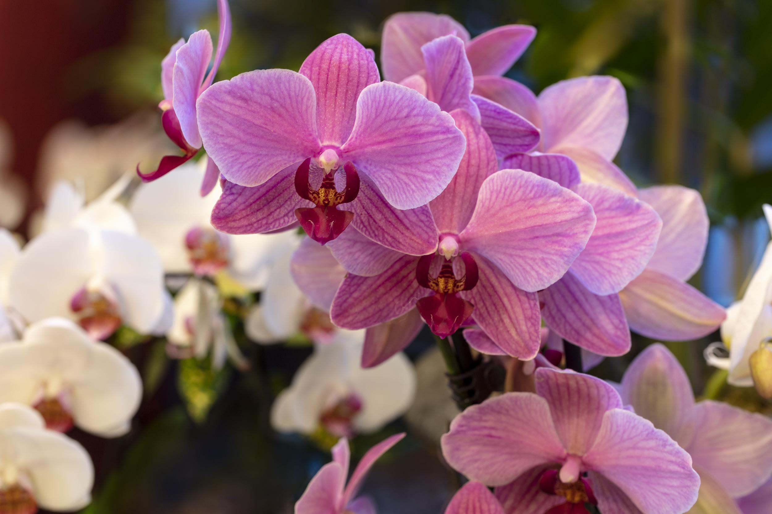 Orchids2-4.jpg