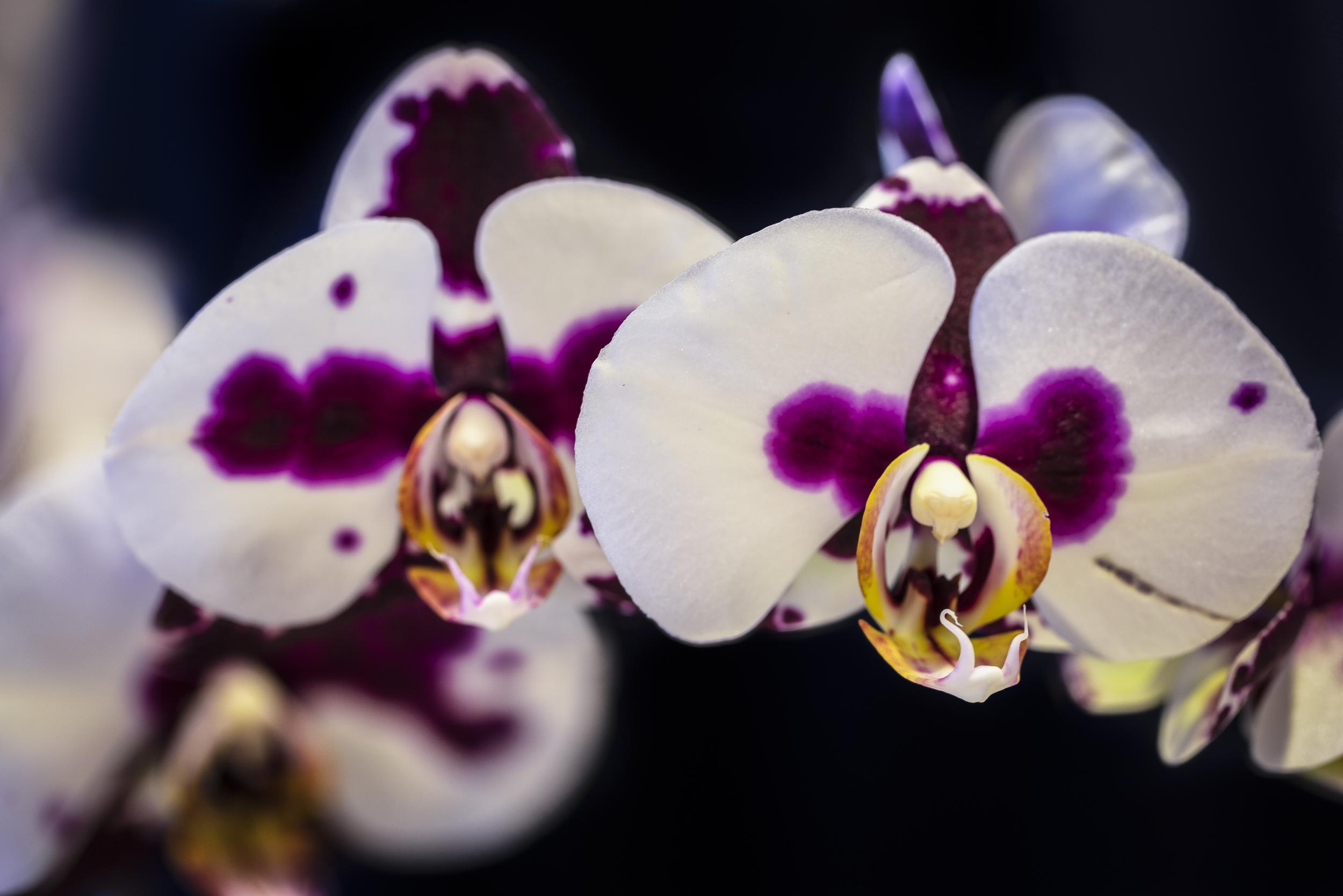 Orchids2-7.jpg