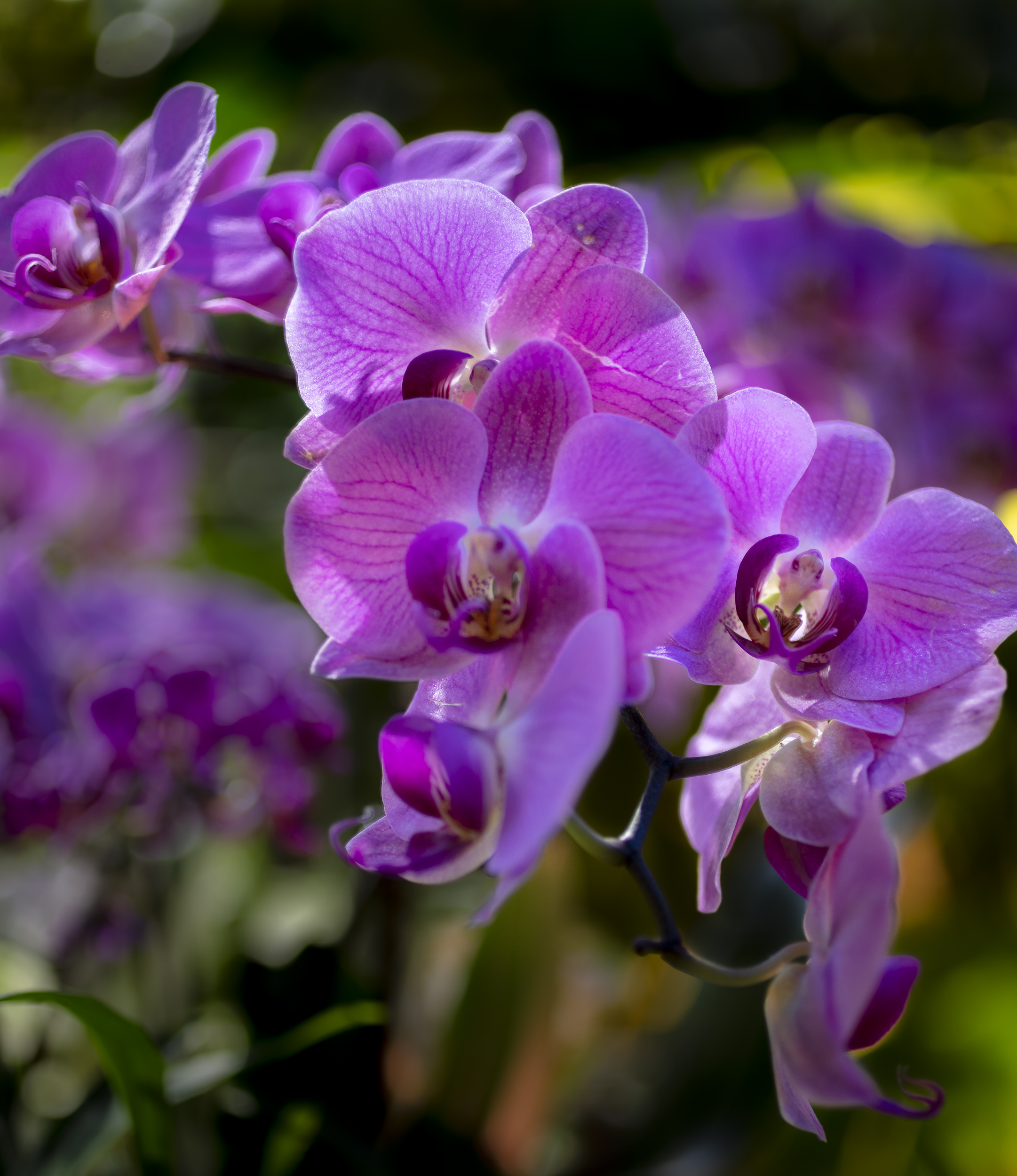 Orchids2-10.jpg