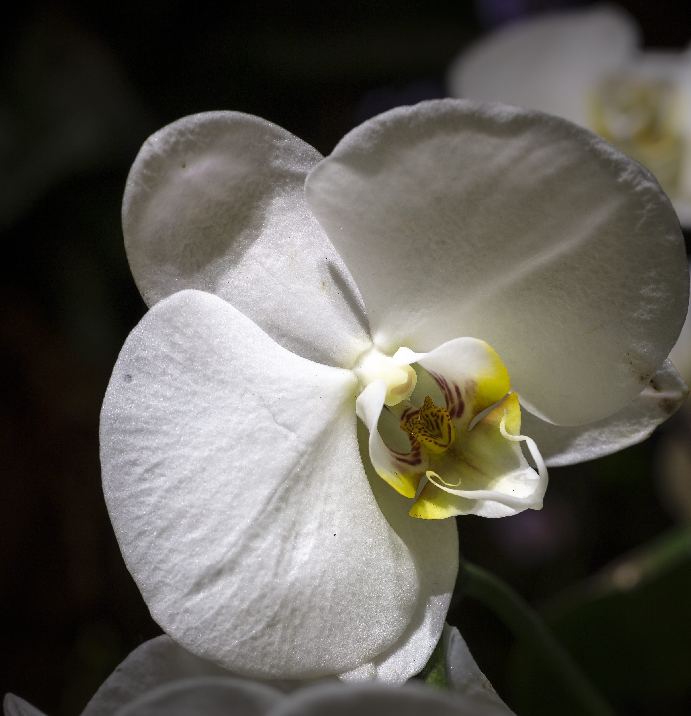 Orchids2-11.jpg