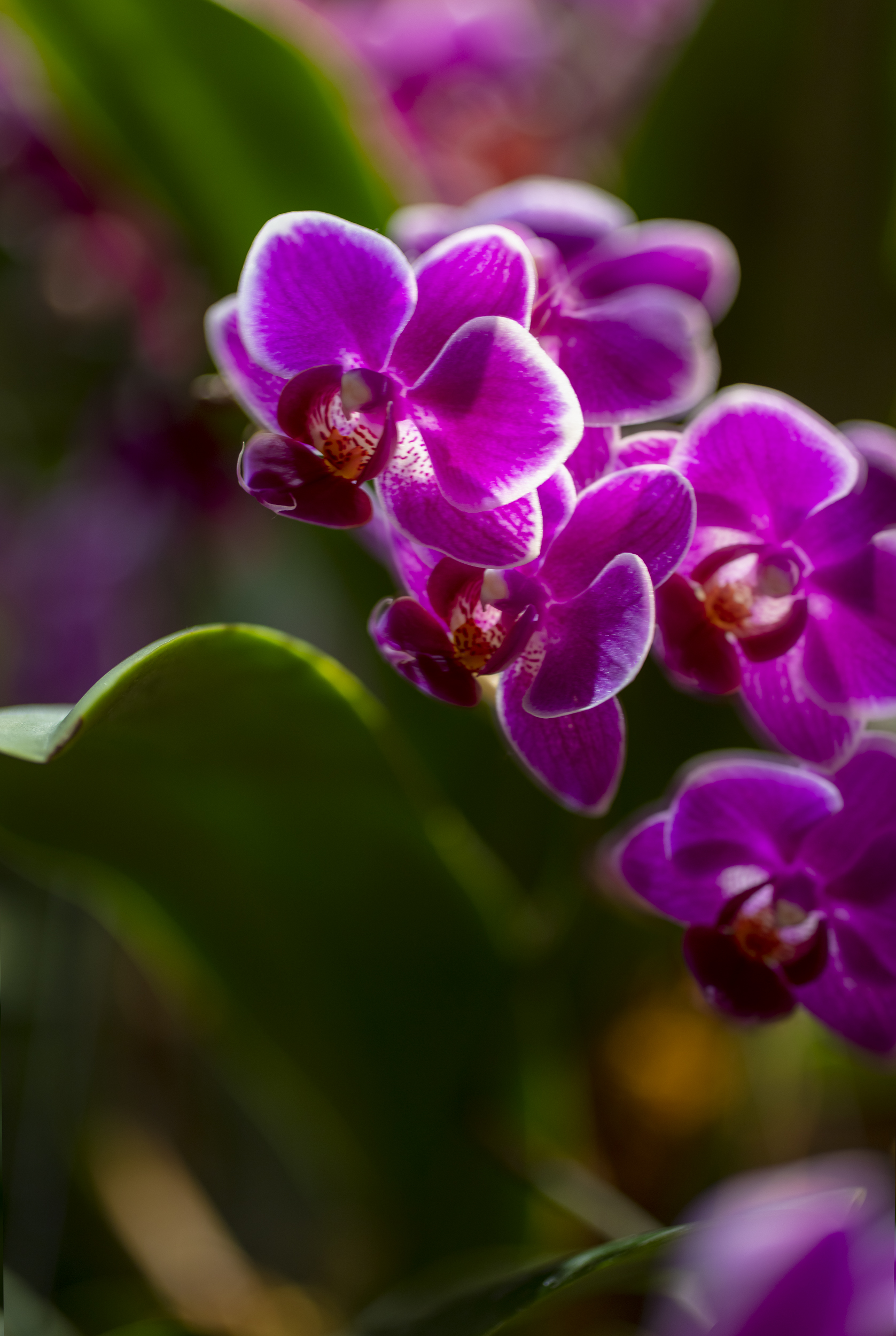 Orchids2-13.jpg