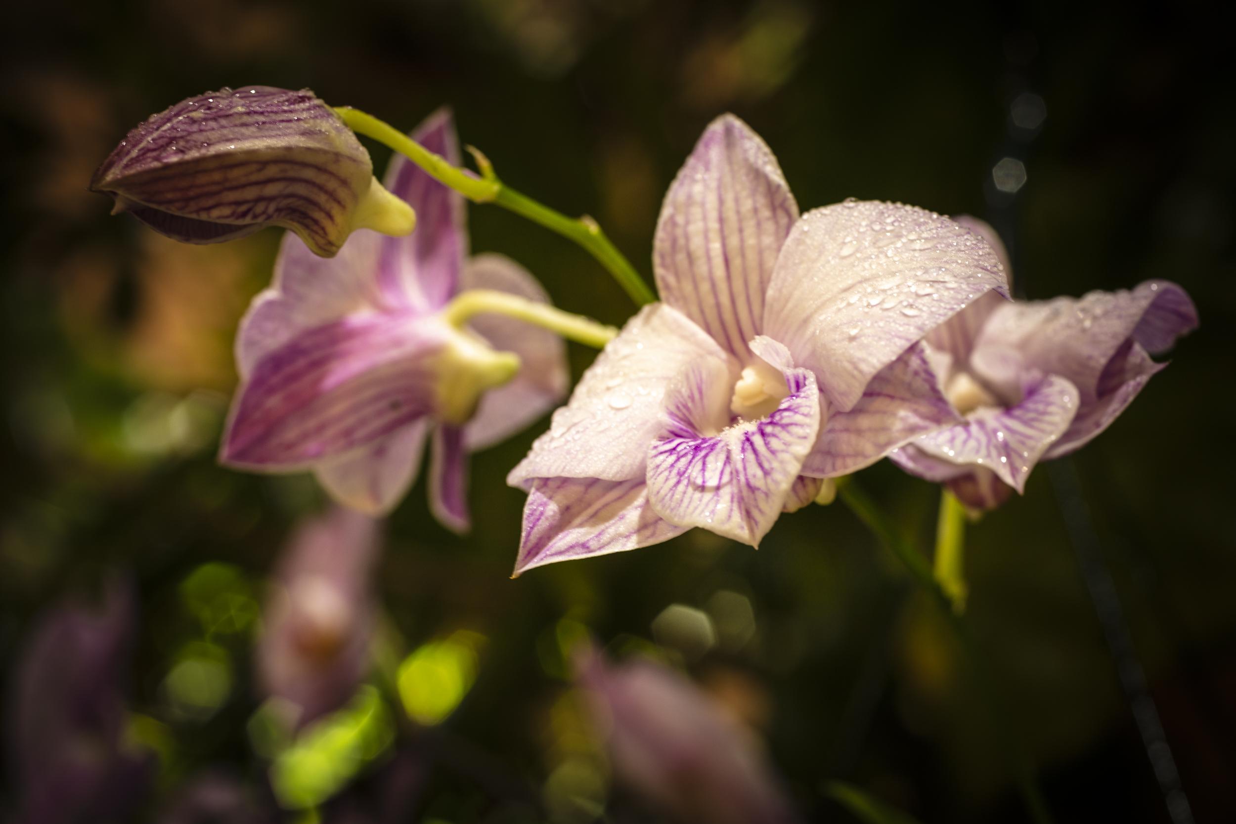 Orchids2-18.jpg