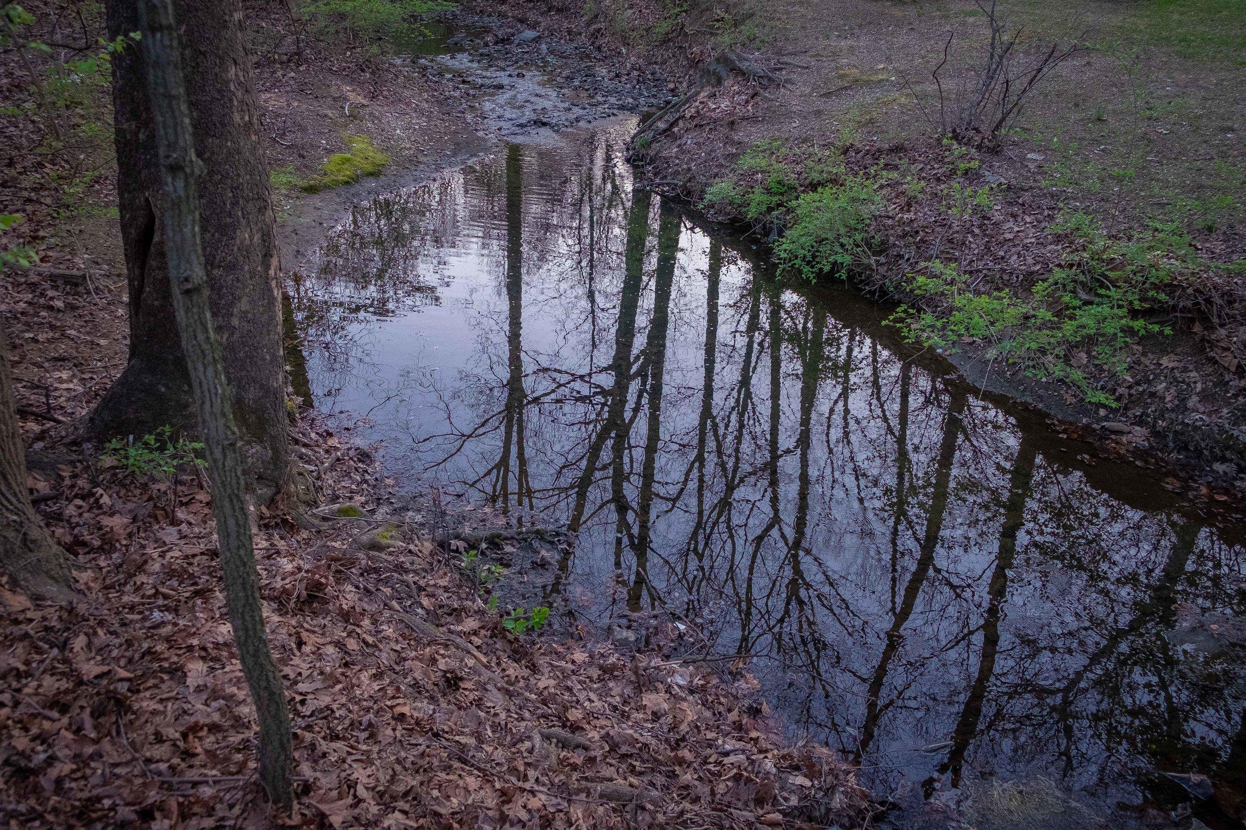 Grosvenor Park - 4/11/18