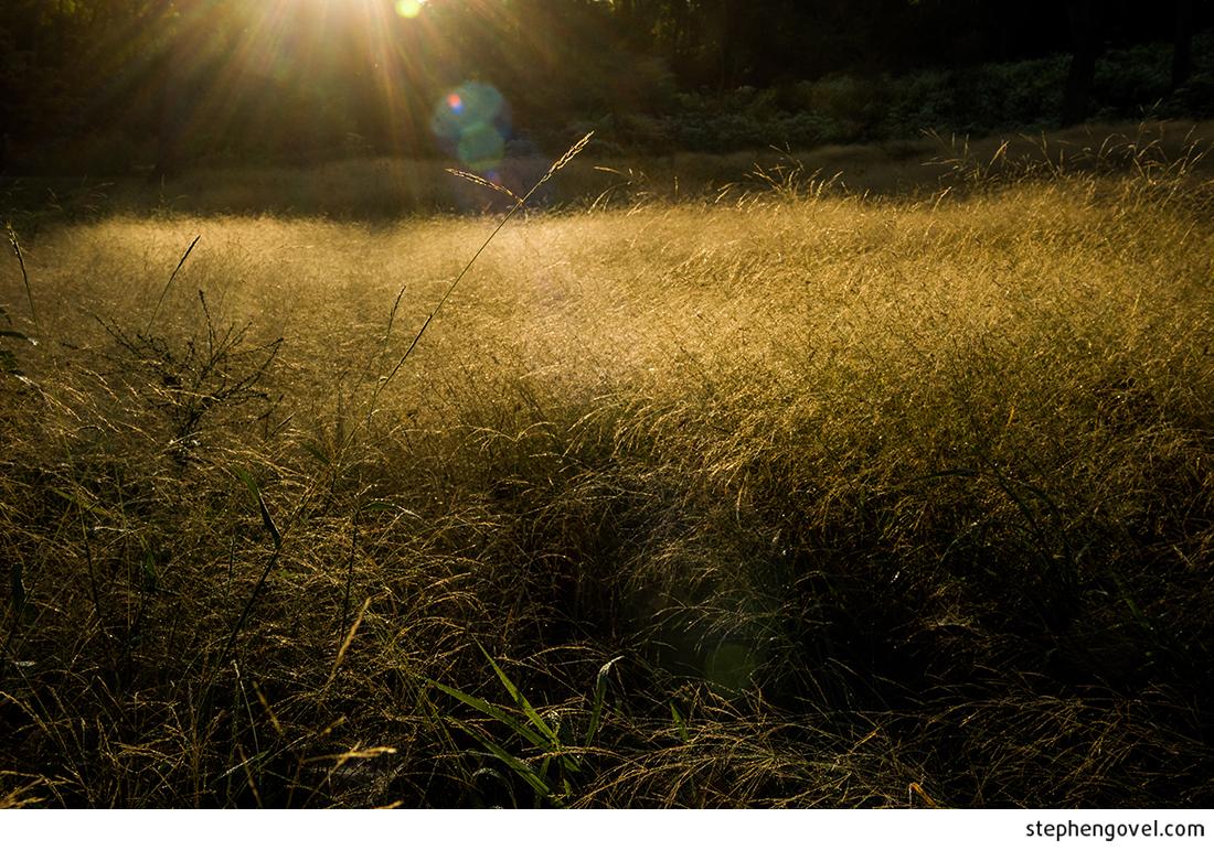 landscapearchitectphiladelphia05.jpg