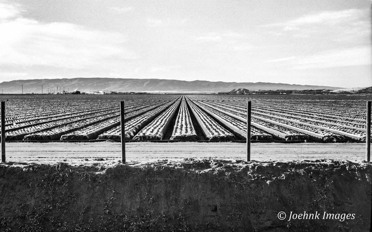 Central Valley #41