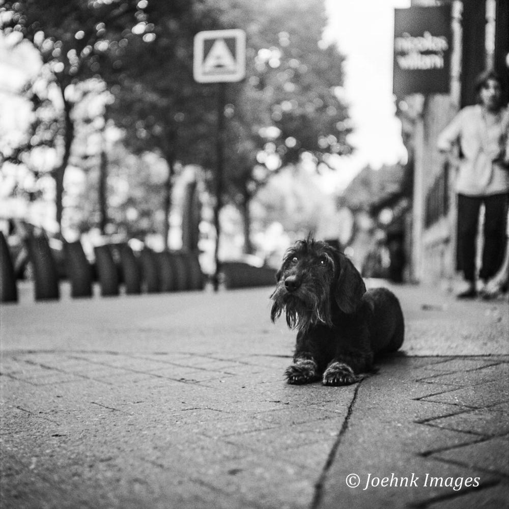 Paris #146