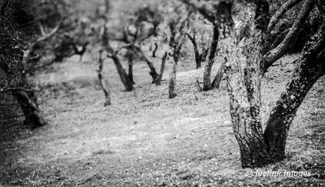 Walnut Creek #06