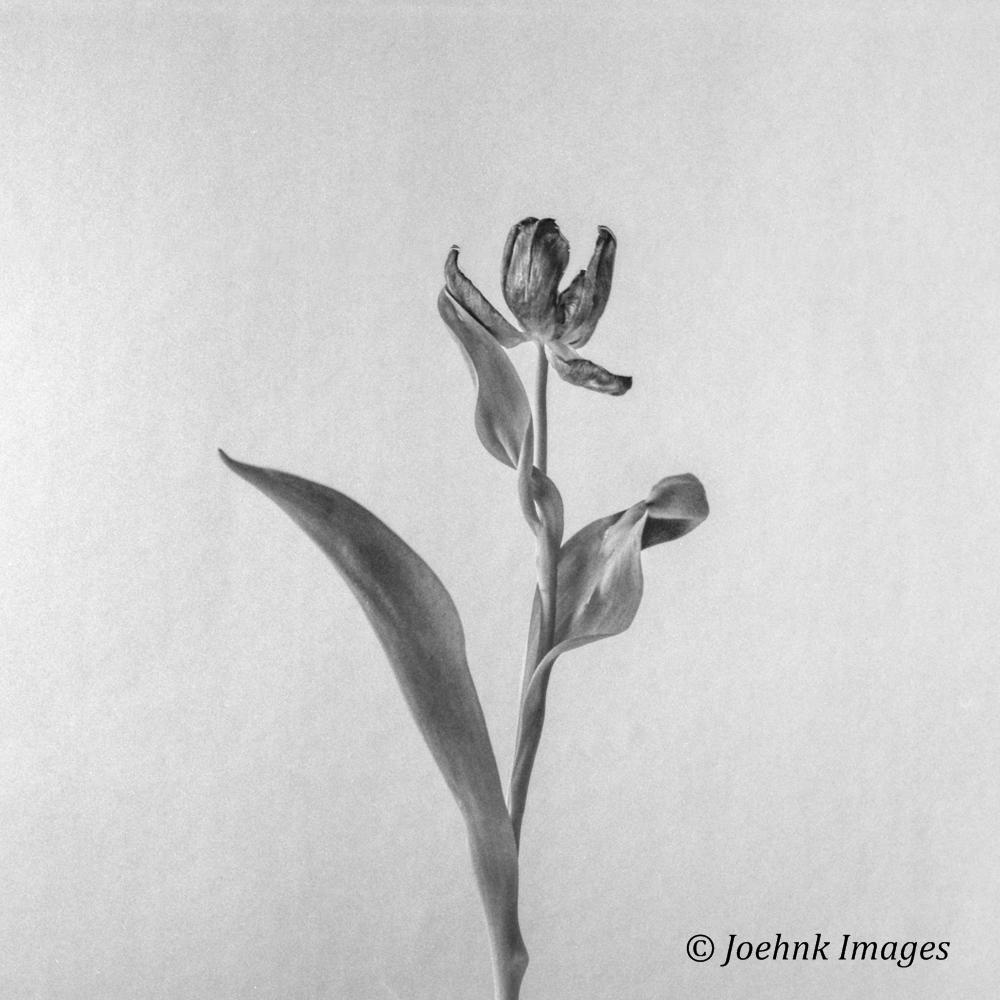 Flowers Past #11