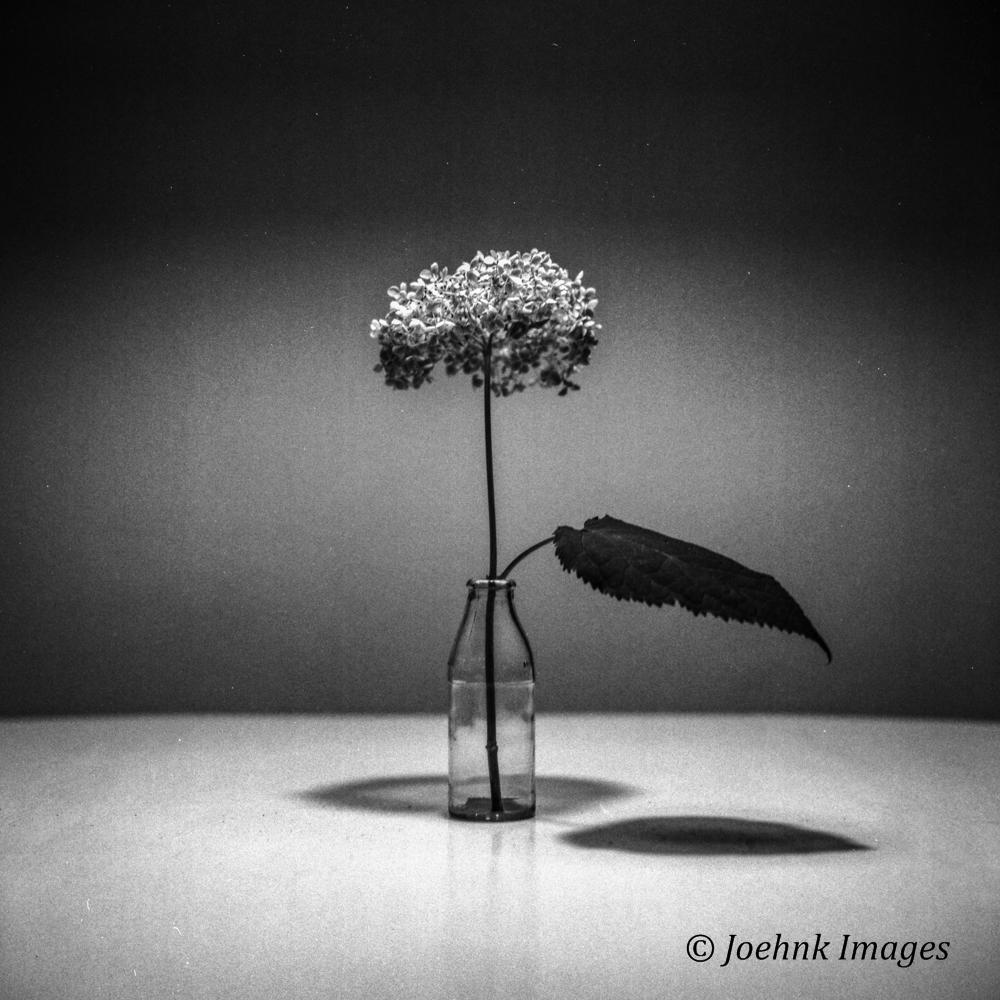 Flowers Past #08