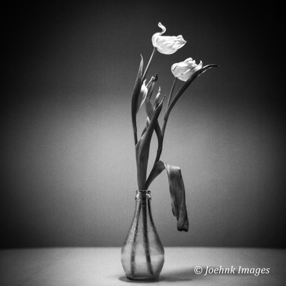 Flowers Past #32