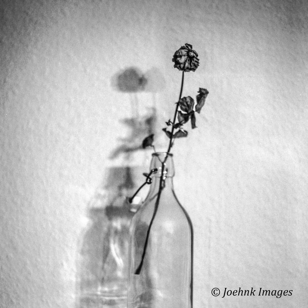 Flowers Past #07