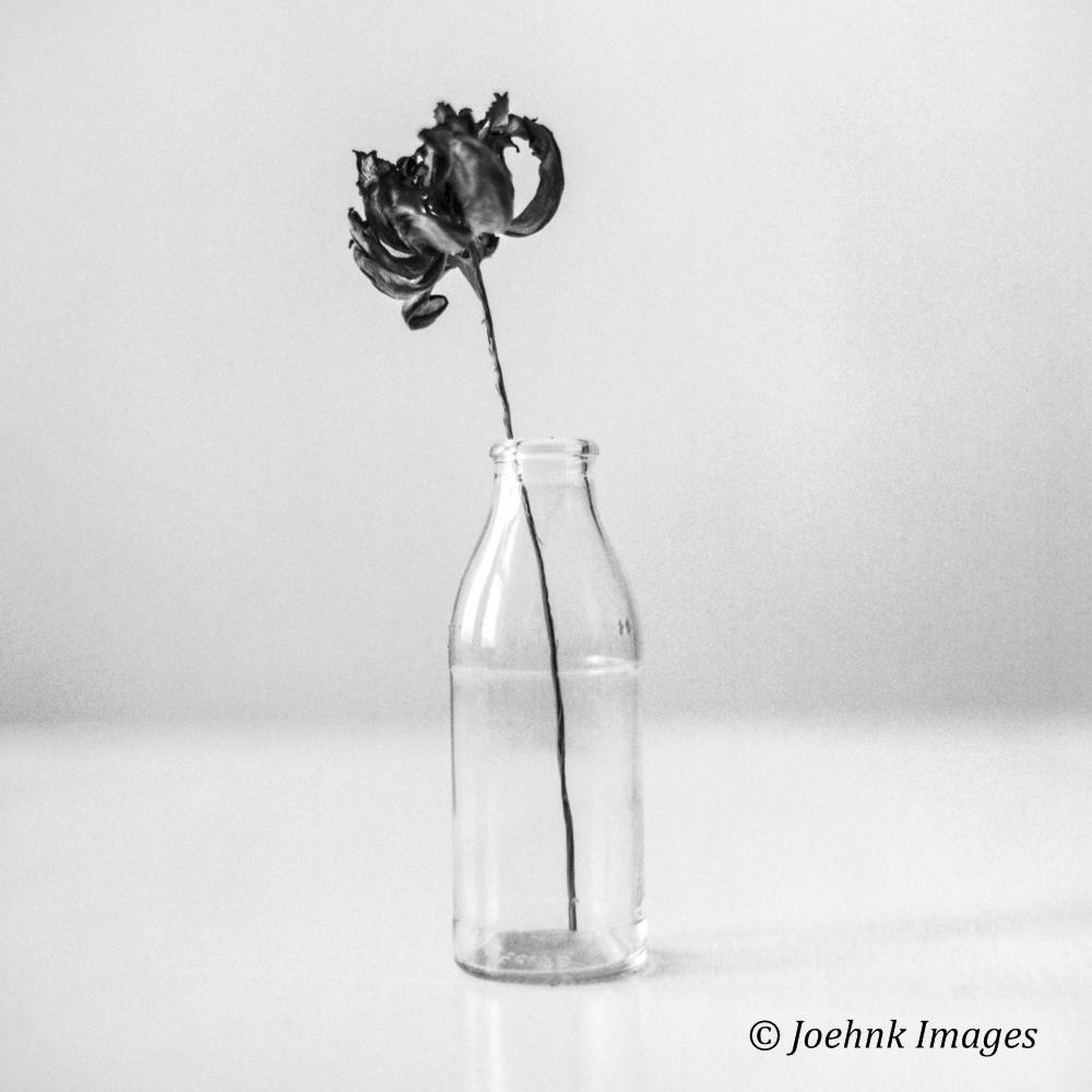 Flowers Past #53